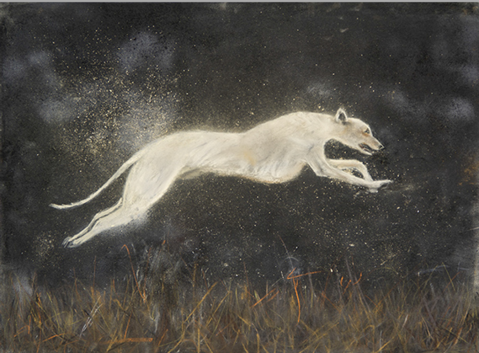 Canis by Robert Bissell