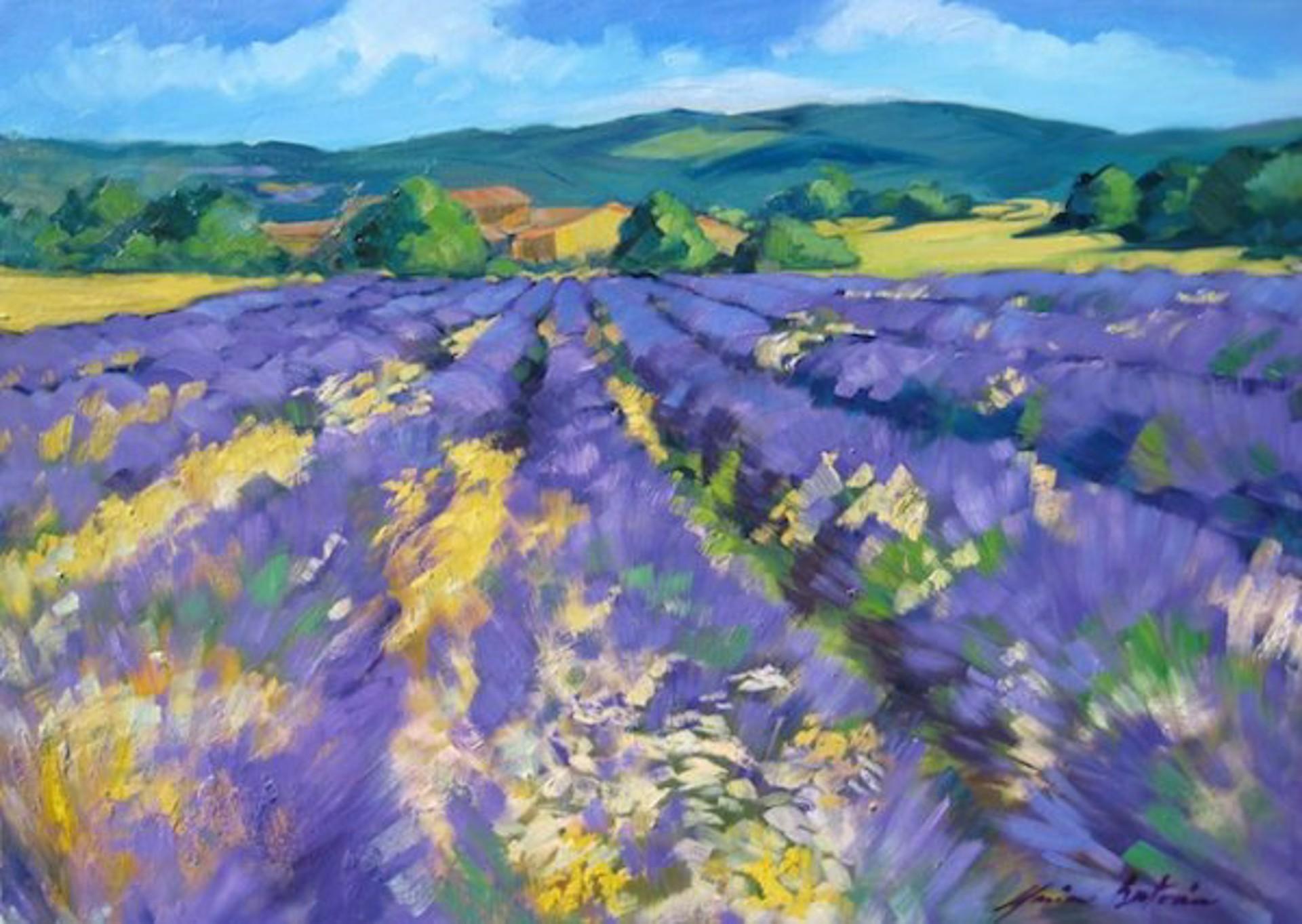 Plateau De Albion Lavender by Maria Bertrán