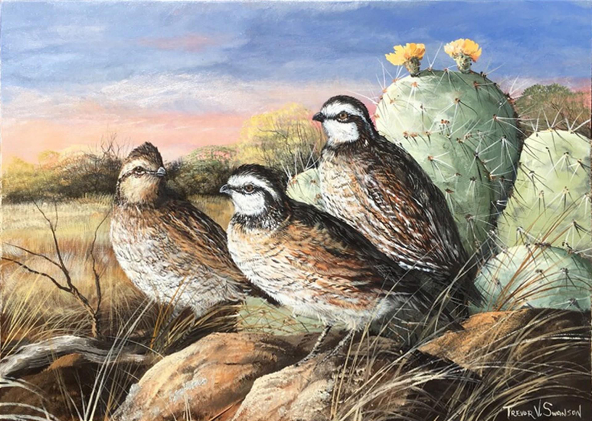 Cool Spring Morning (Bobwhite quail) by Trevor Swanson