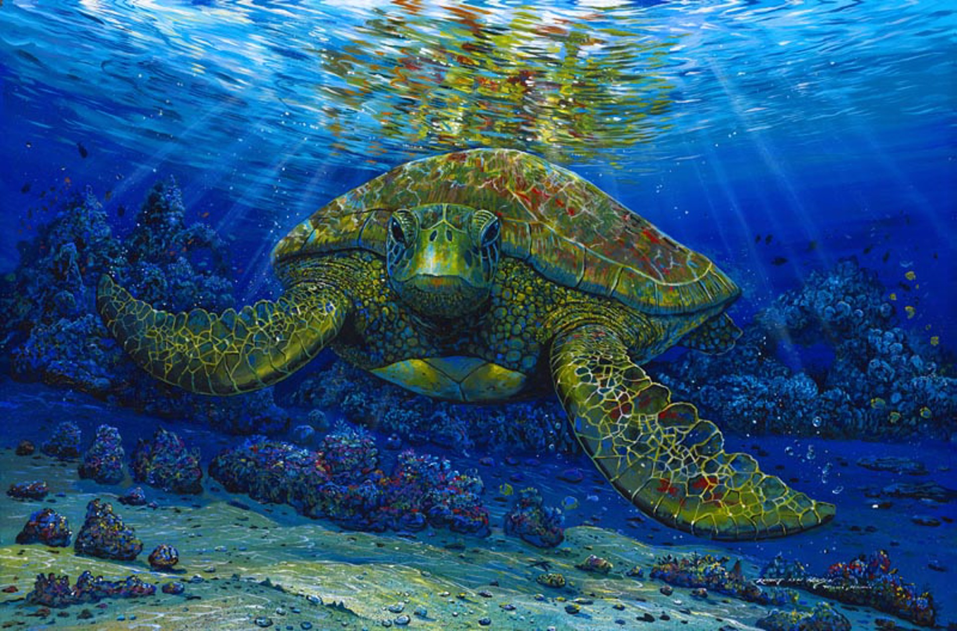 Talk Story With A Turtle by Robert Lyn Nelson