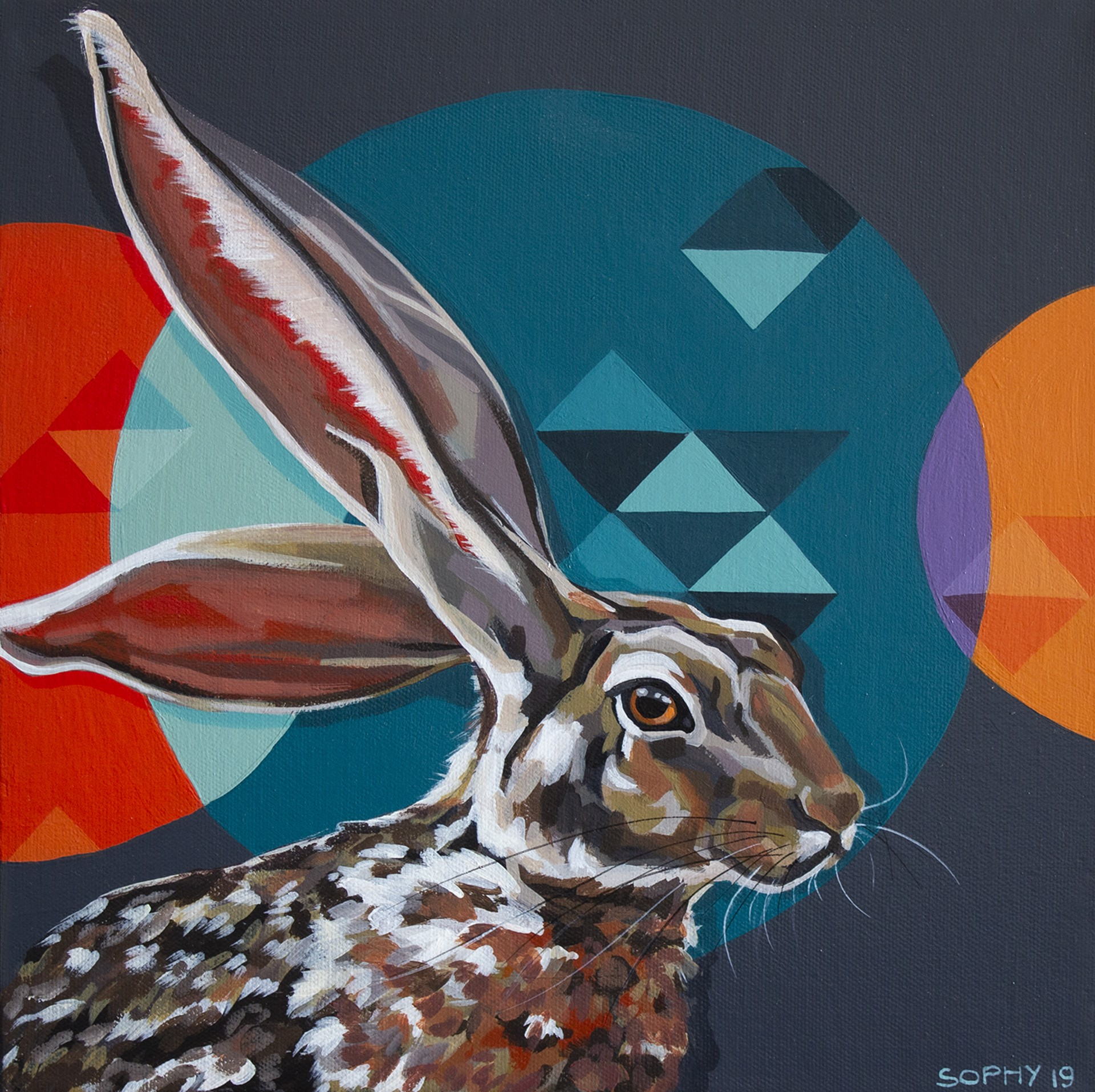Jack Rabbit Circles by Sophy Tuttle