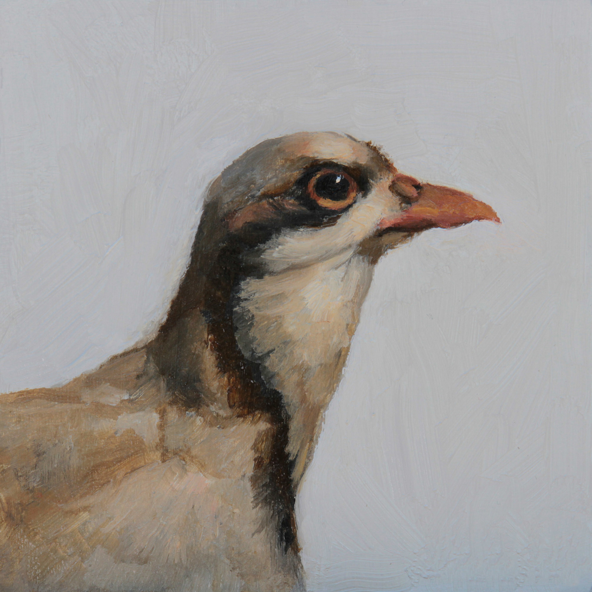 Chukar Partridge by Linda Tracey Brandon