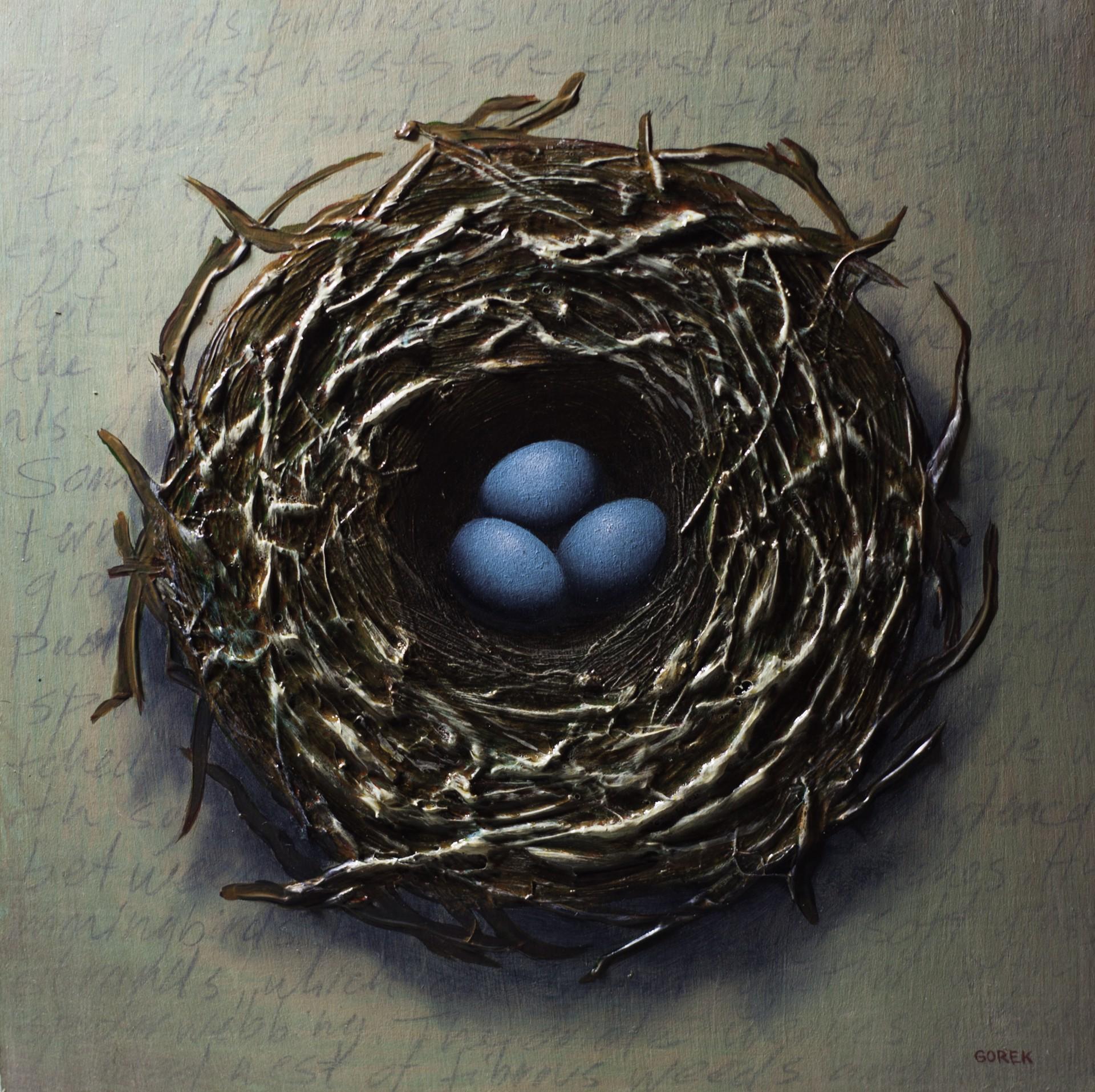 Bird's Nest, Three Eggs by Thane Gorek