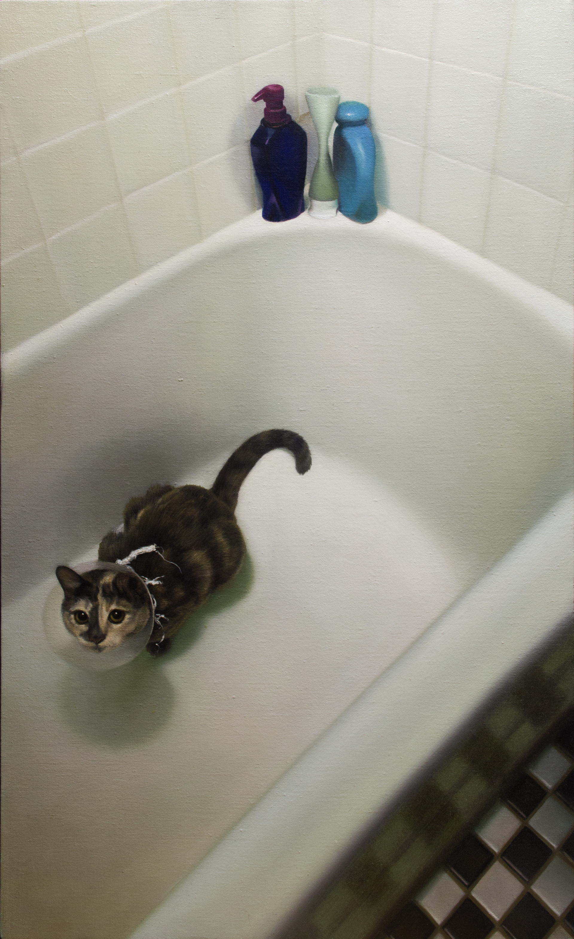 Cat in Bathtub by Zane York