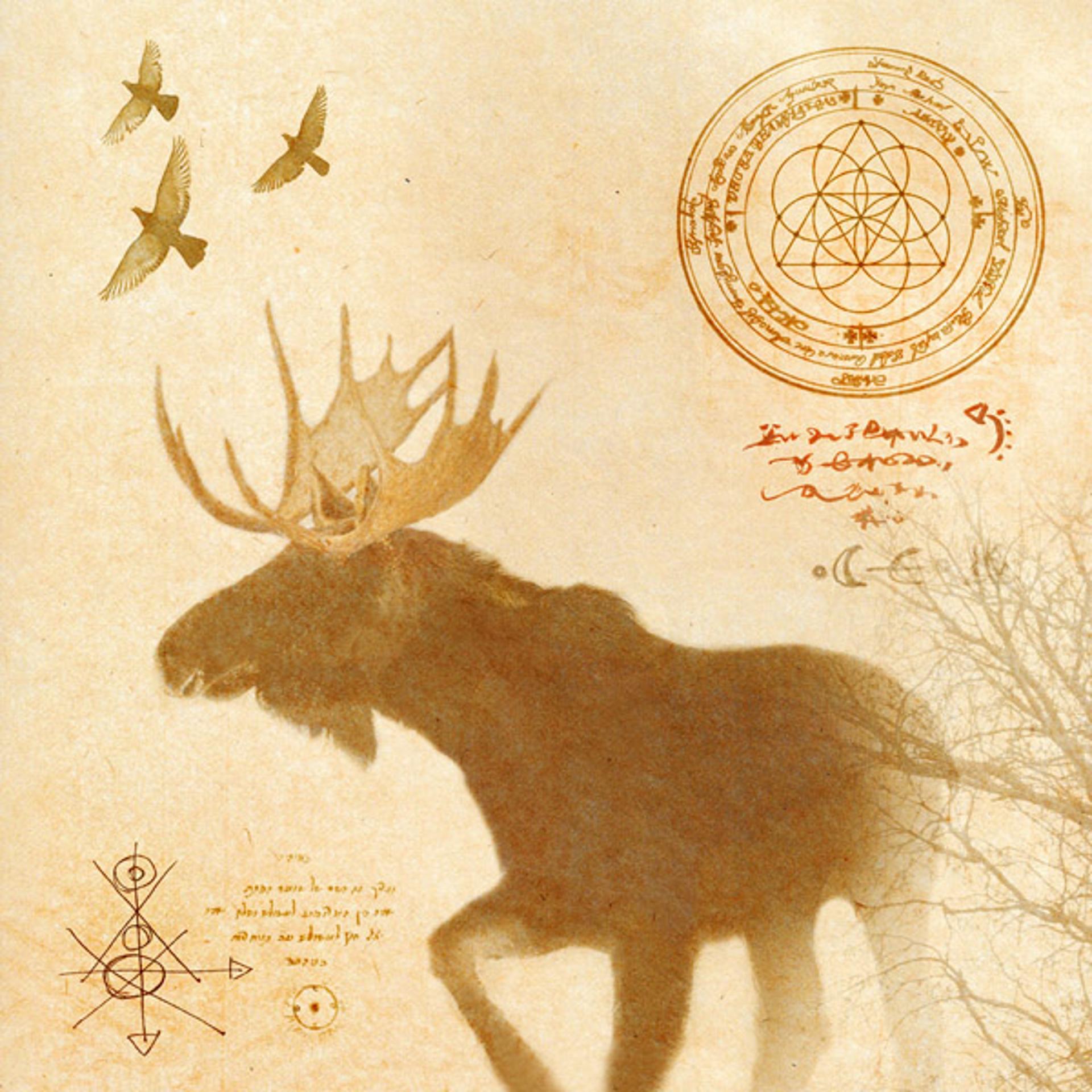 Healing Moose in Yellowstone by Yuko Ishii