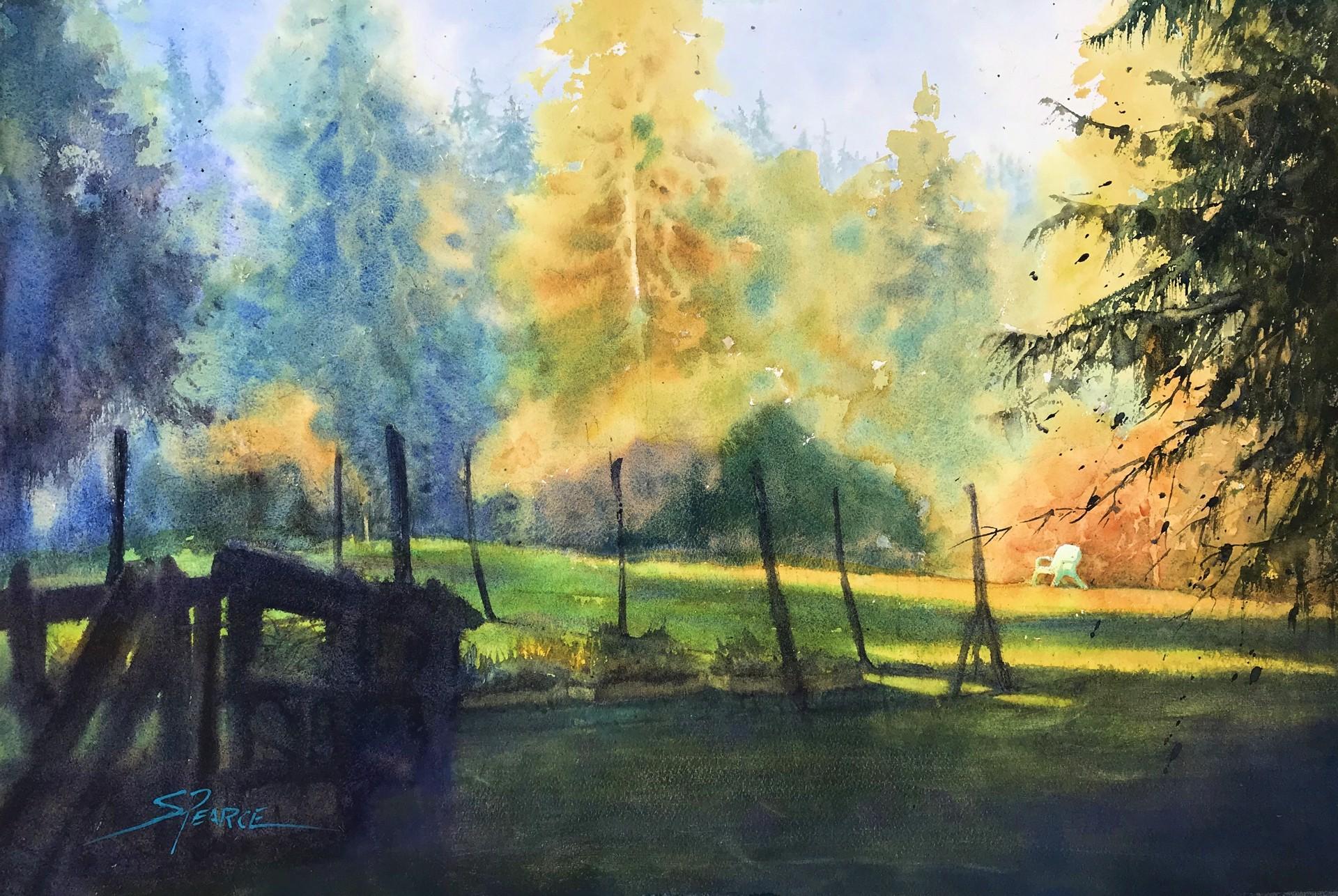 Sunrise in the Garden by Sandra Pearce