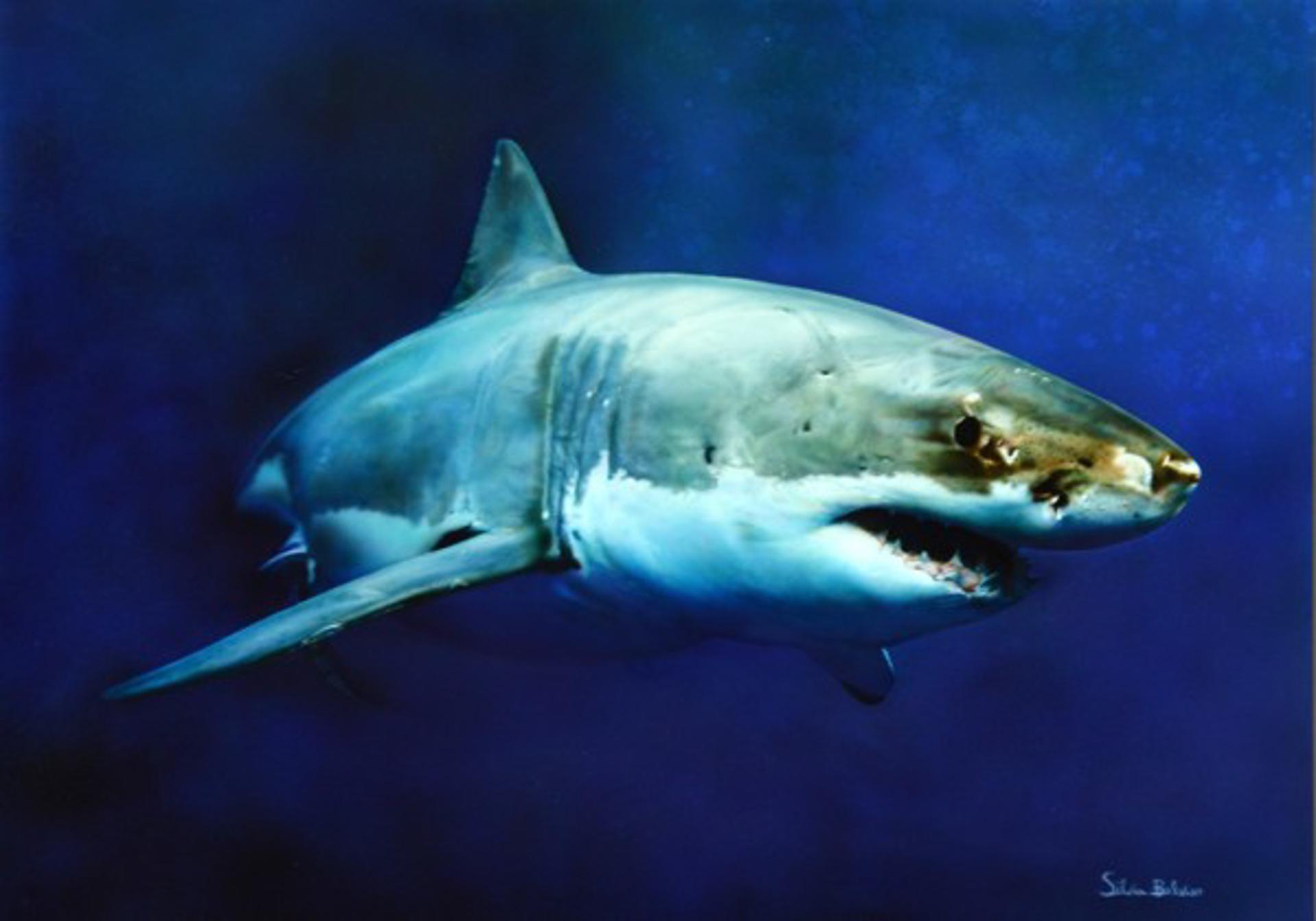 White Shark by Silvia Belviso