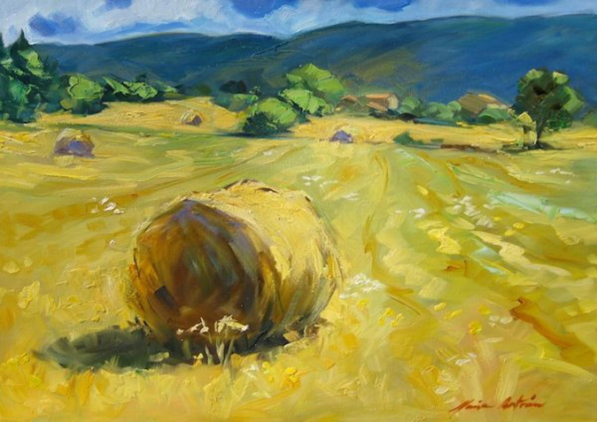 Bertran: Haute Provence Hayrolls by Maria Bertrán
