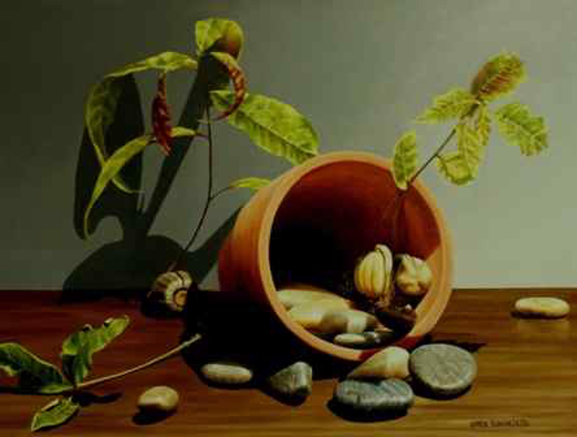 Sapling and Rocks by Loren DiBenedetto