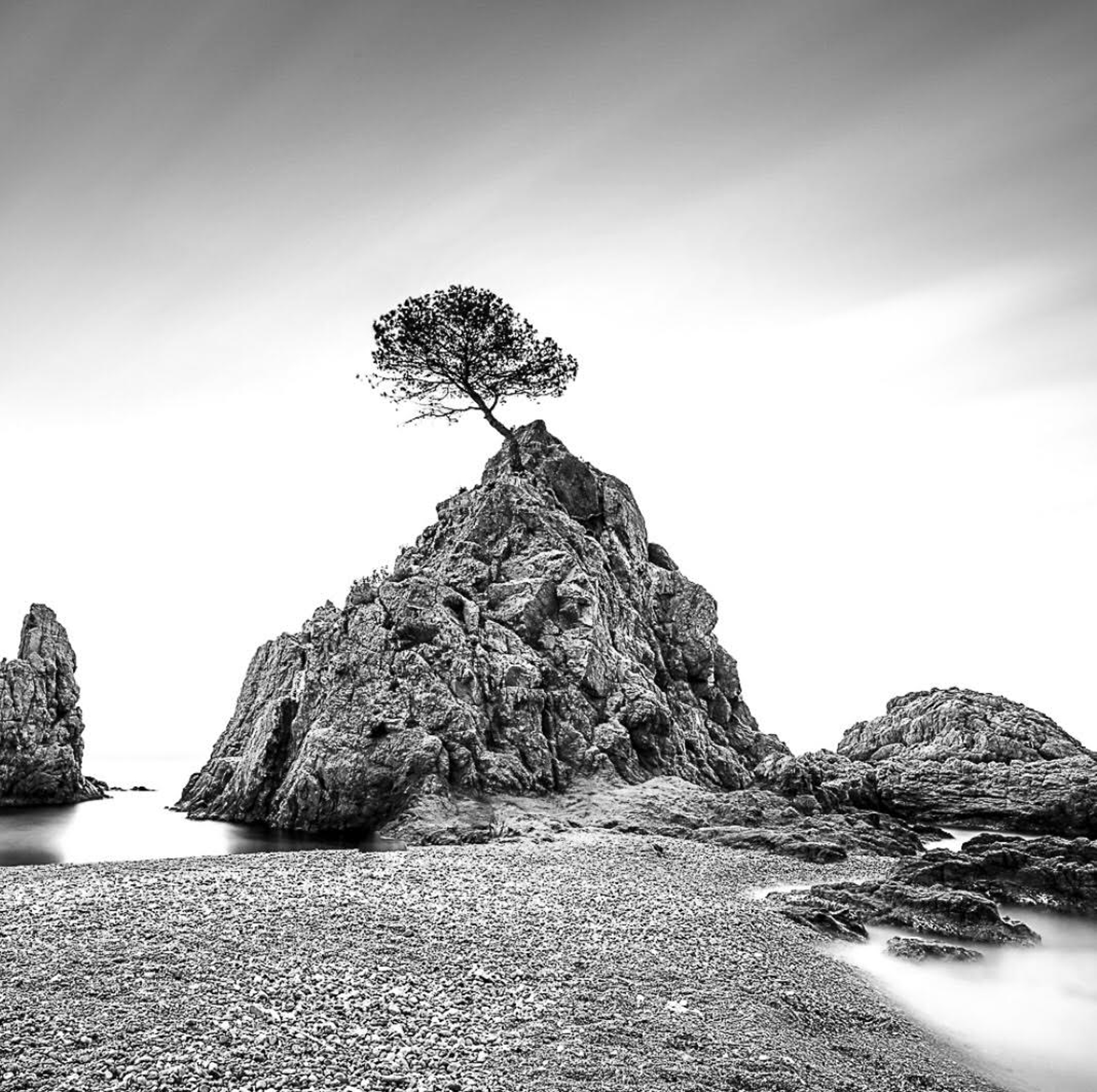 Tree at Tossa de Mar by Keith Ramsdell