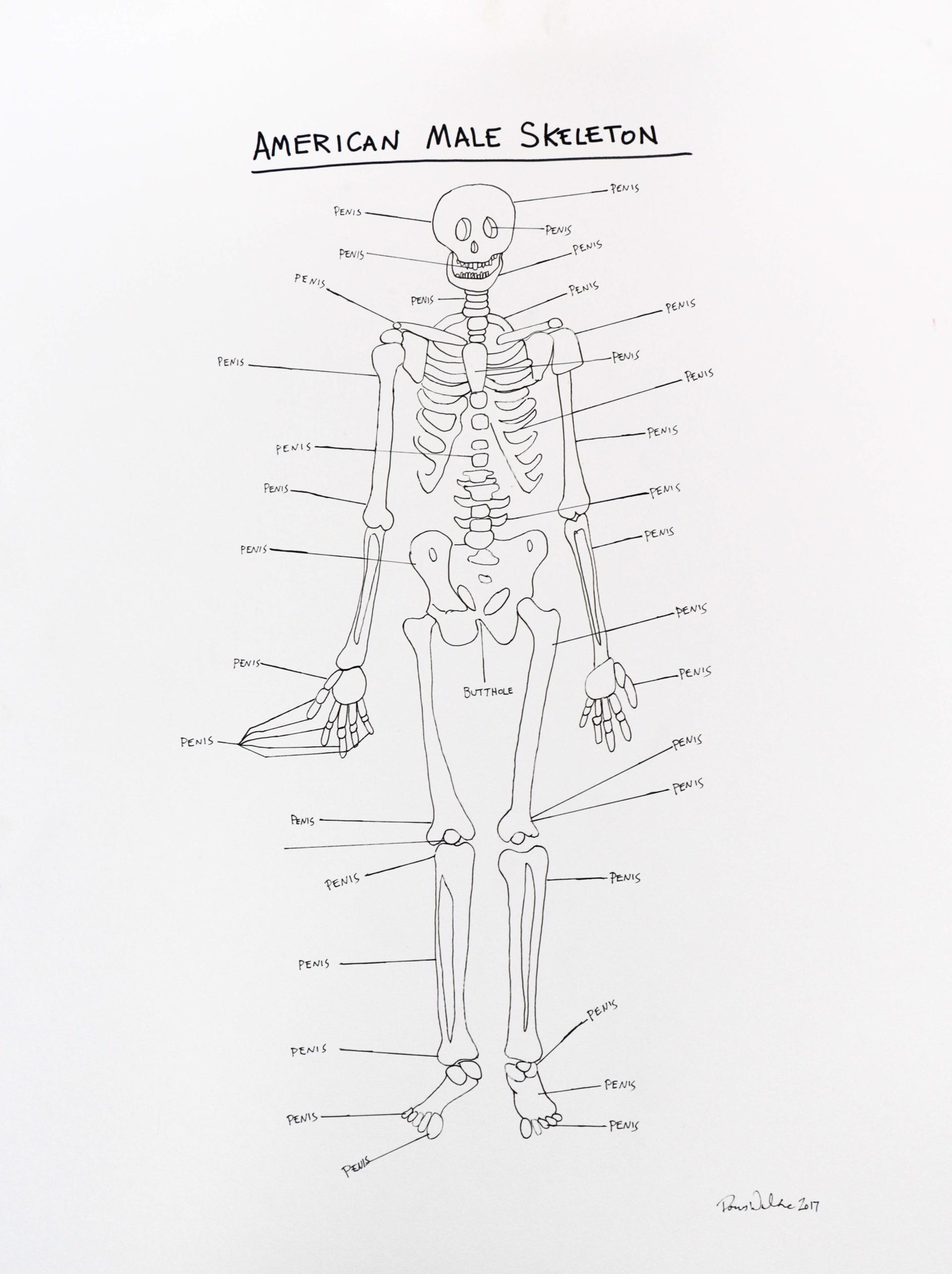 American Male Skeleton by Porous Walker