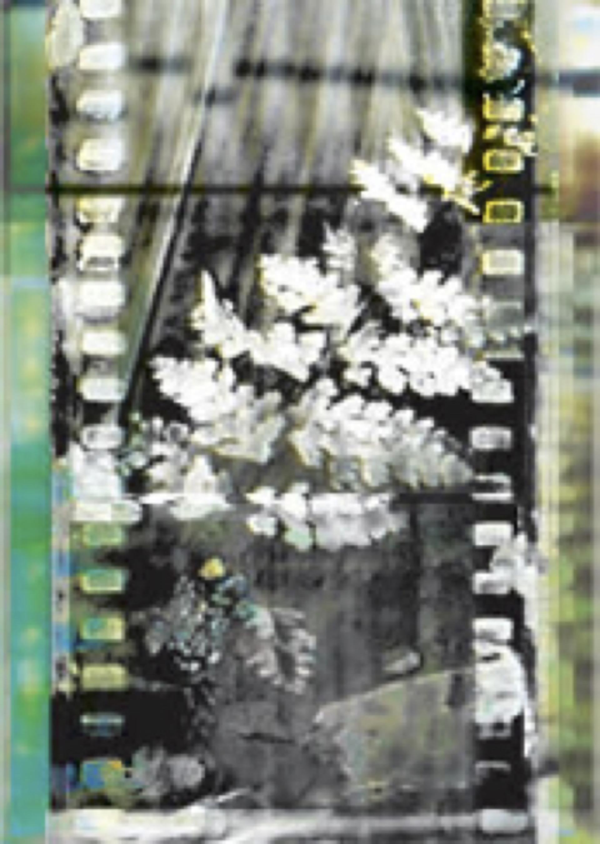 fern film by Donna Cameron