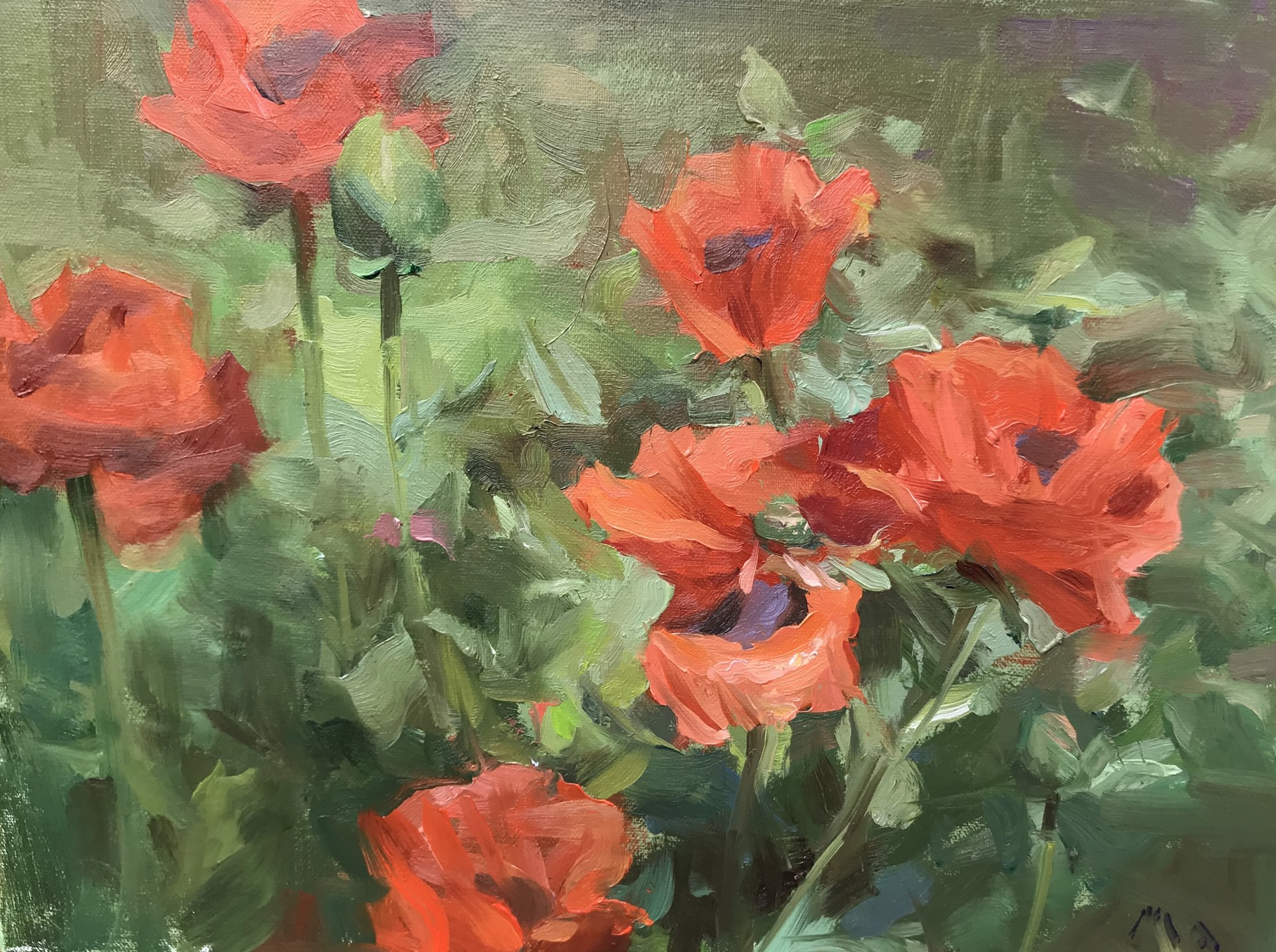 Poppies Garden by Kyle Ma