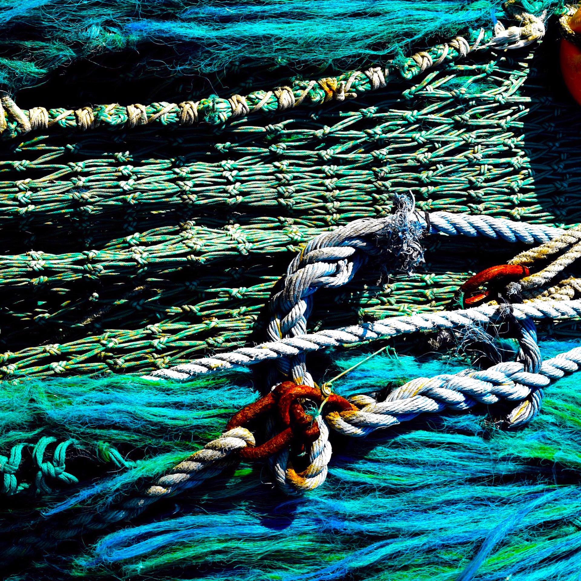 Nets by Kat O'Neill