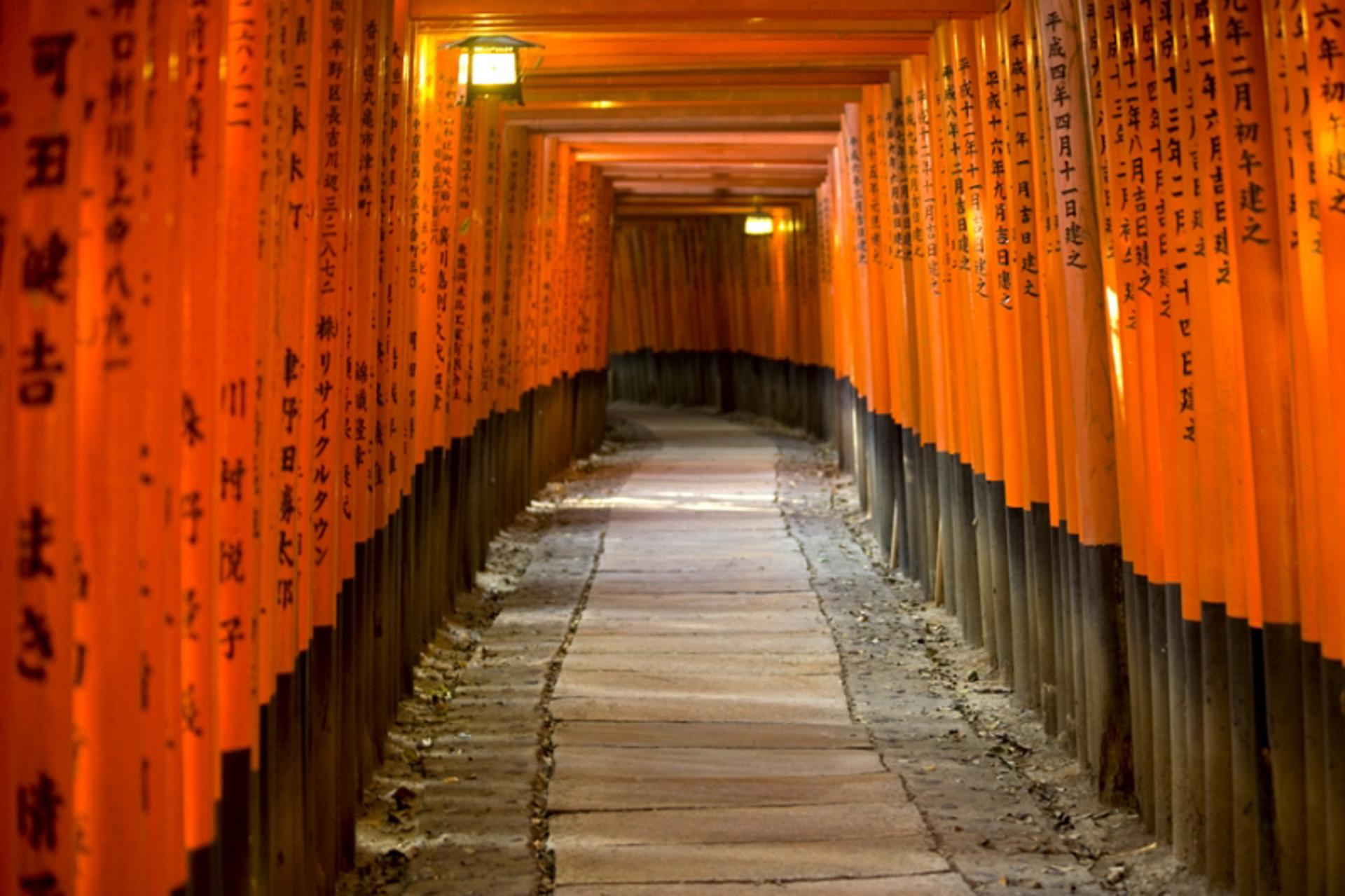 Torii Gates, Fushimi Inari Shrine by Cora Edmonds