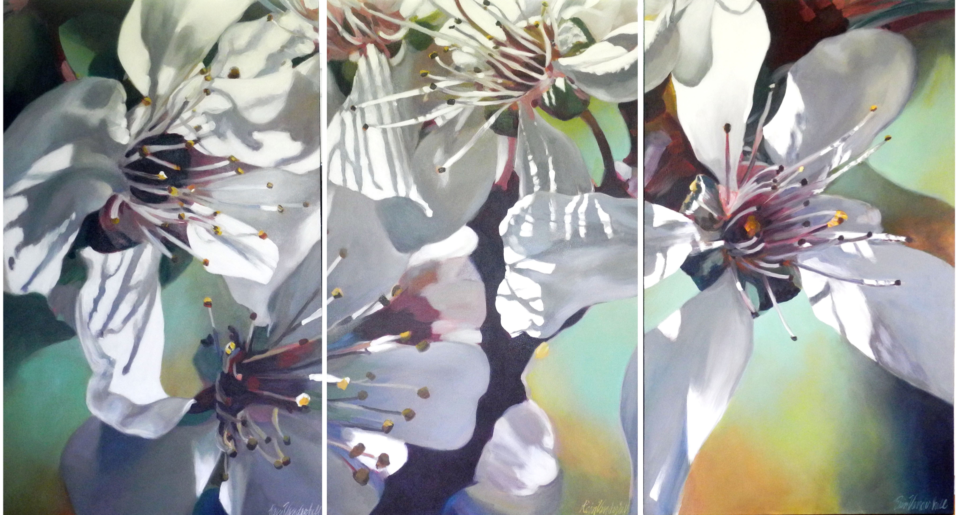 Stamen Shadowed Plum Blossoms by Rein Vanderhill