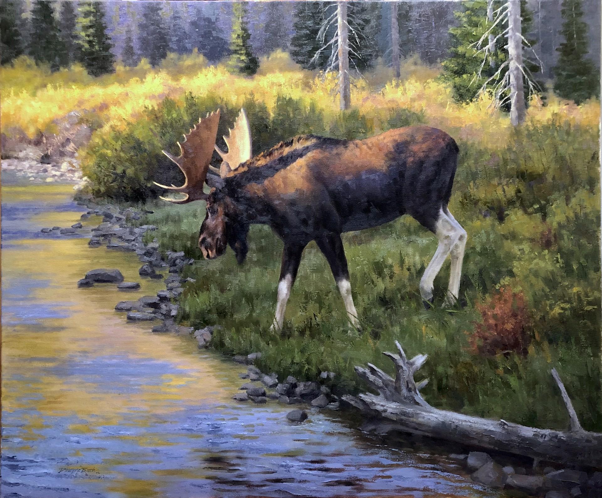 Willow Creek Wanderer by Dwayne Brech