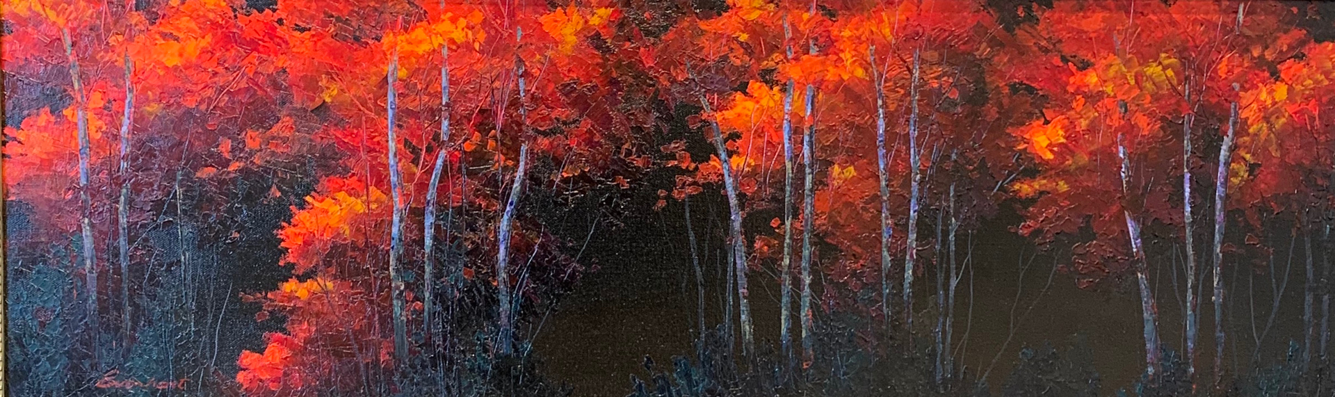 Illuminated Woods by Amy Everhart