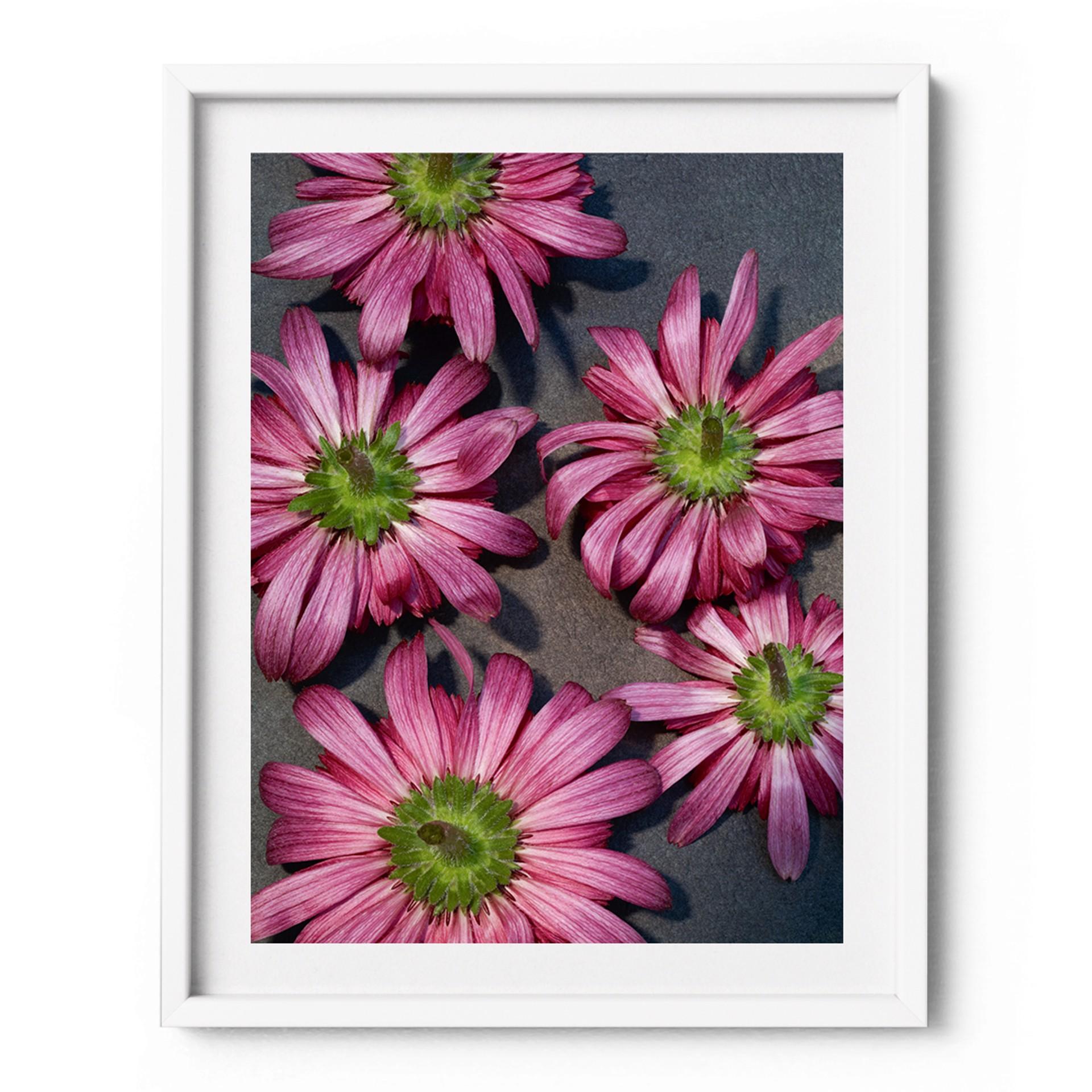 Flower #5 by Gabriella Imperatori-Penn