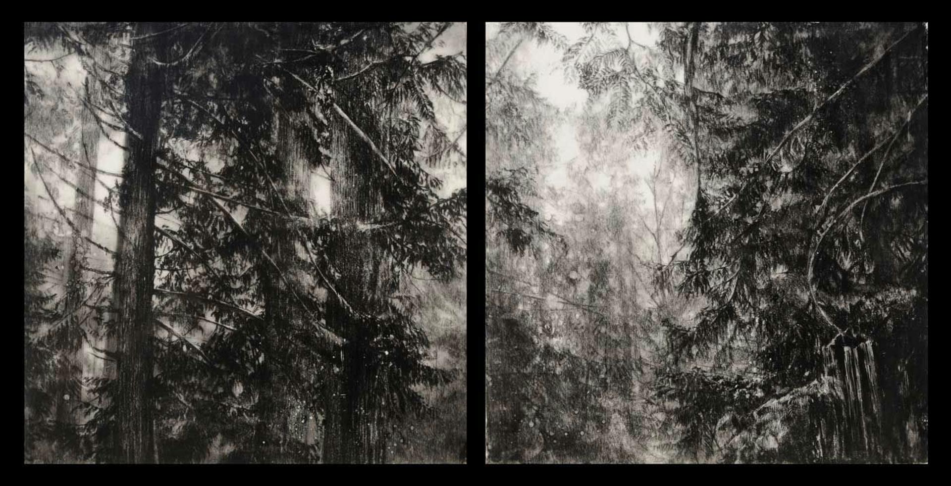 Hypatias Woods II by Robin Cole