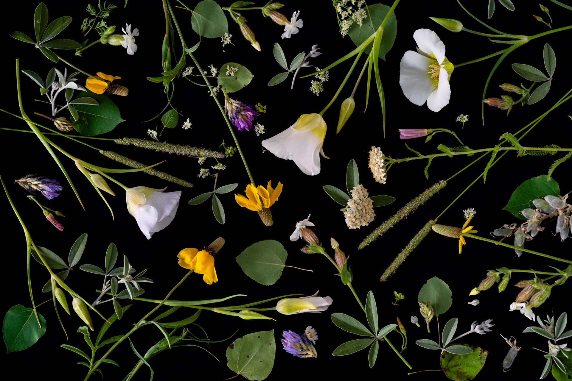 Wildflowers by Jenya Chernoff