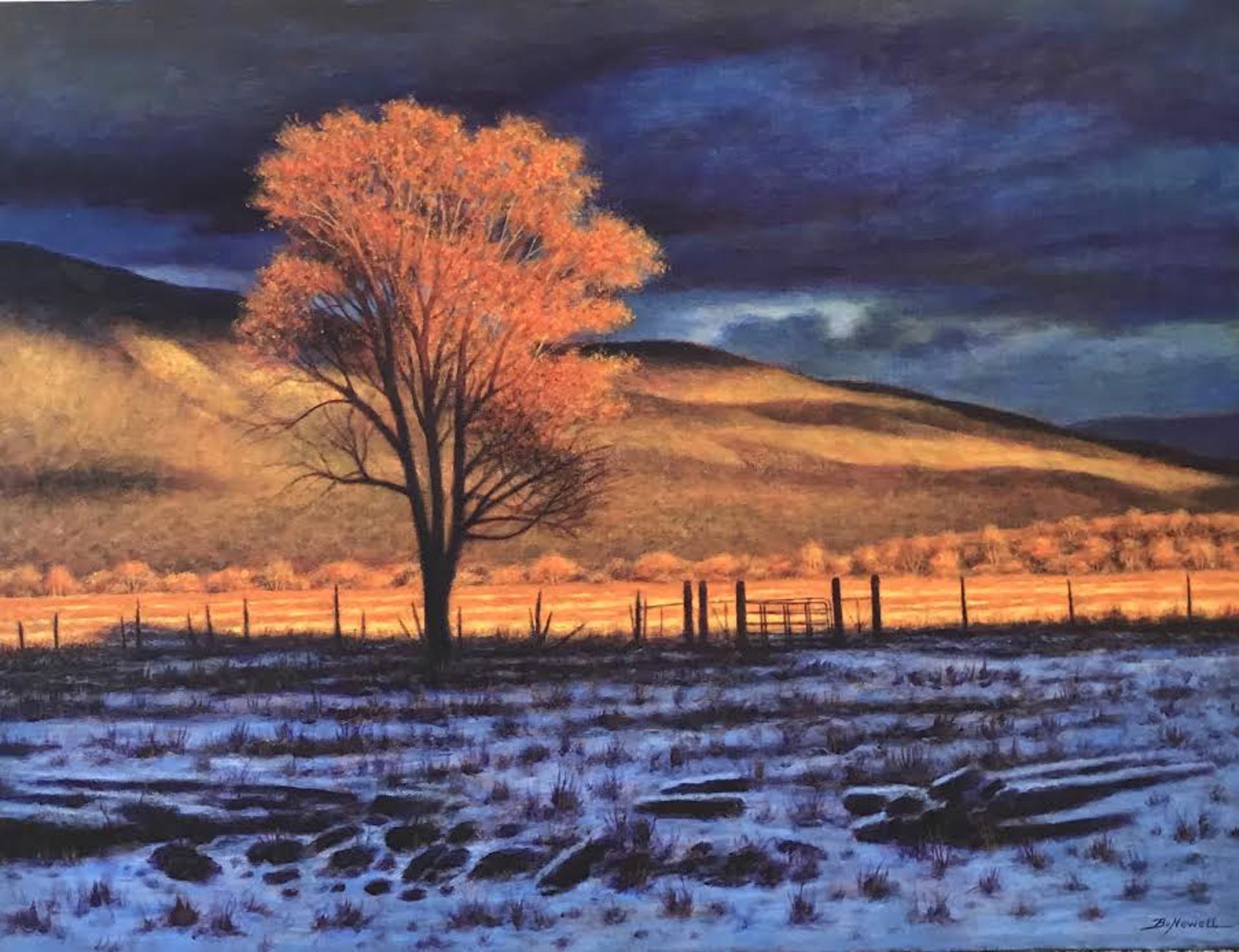 Evening Light by Bo Newell