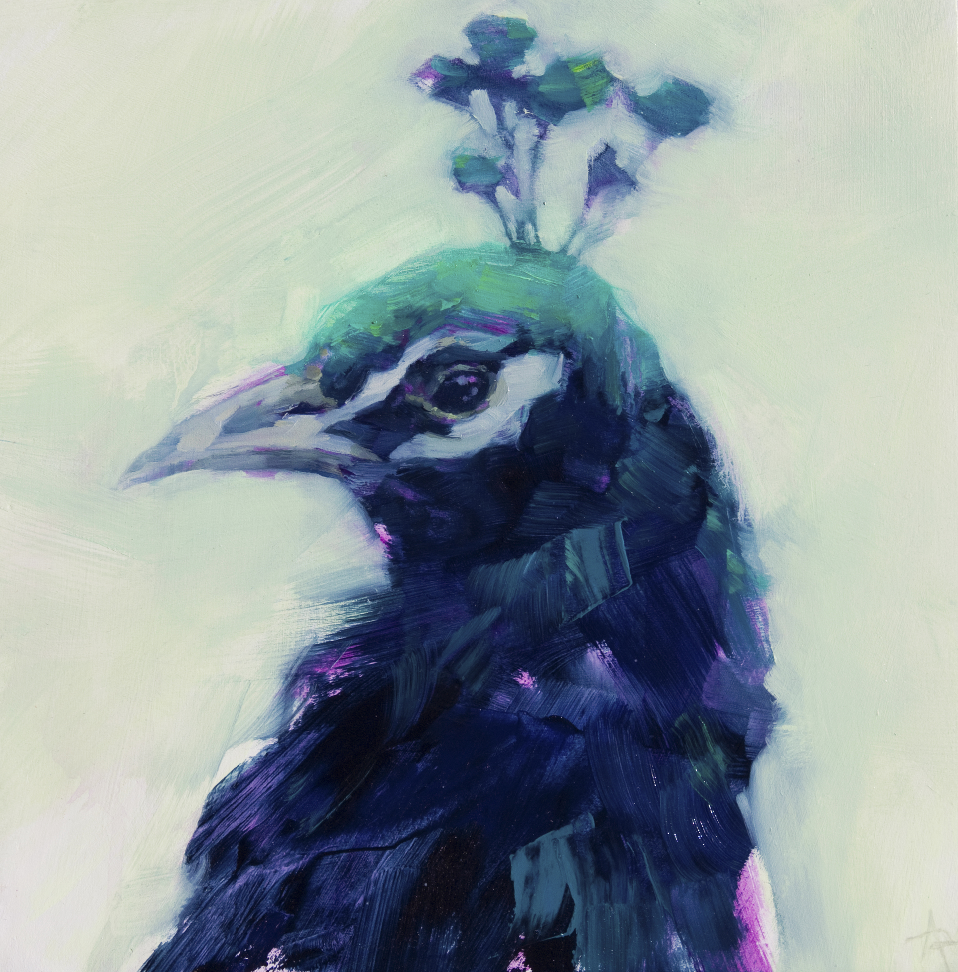 Peacock Portrait by Angie Renfro