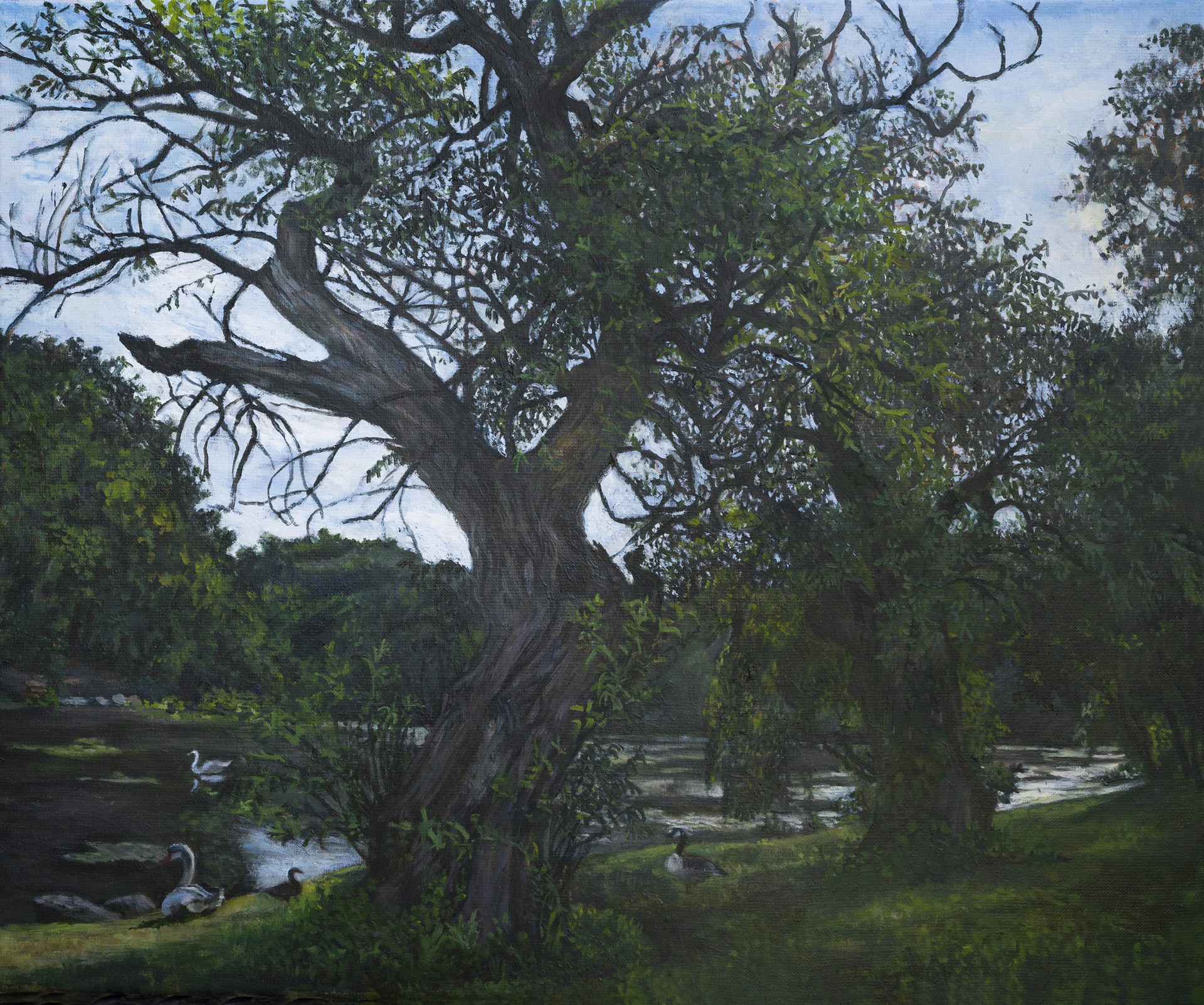 Two Trees by Kim Power
