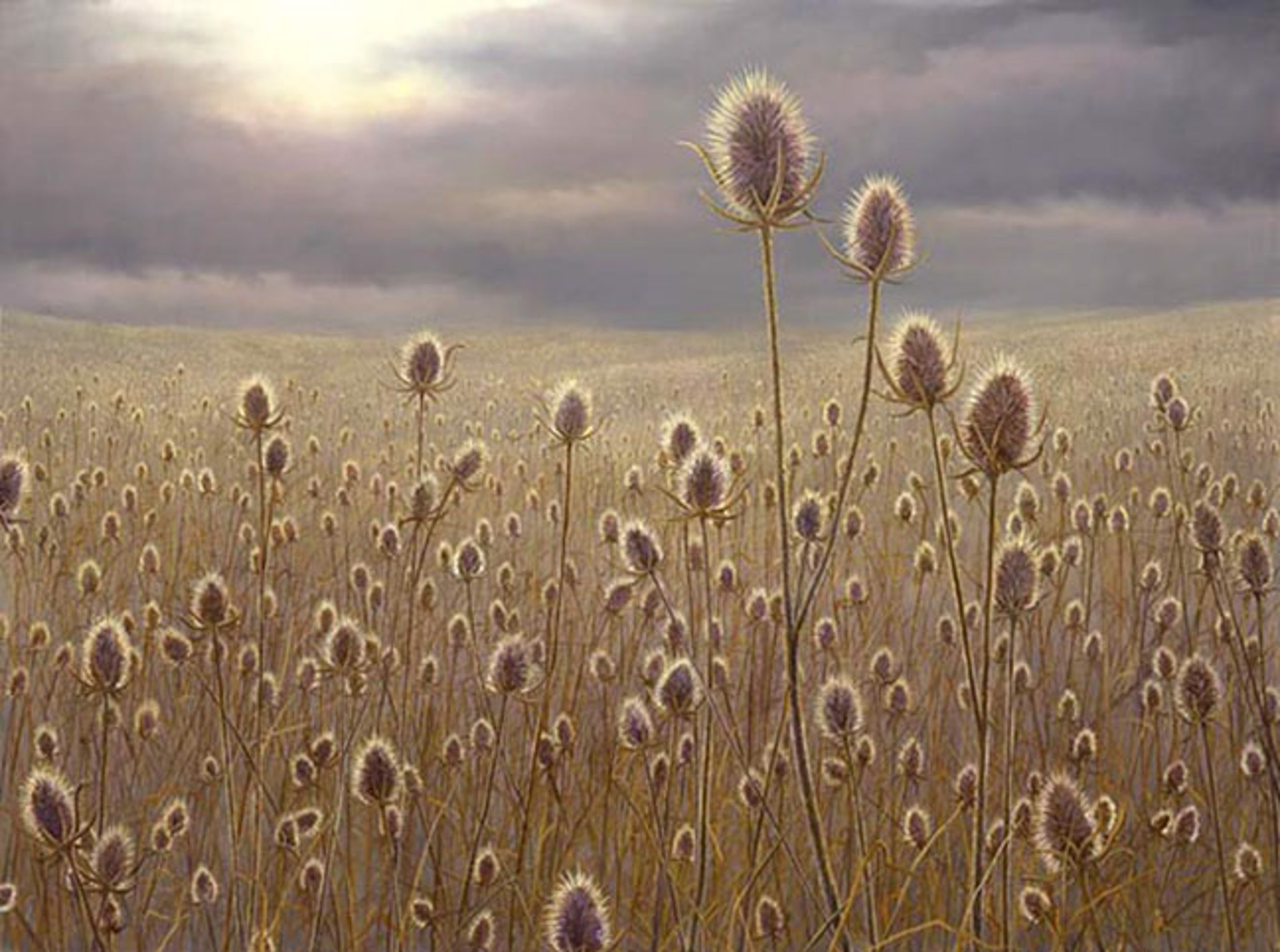 Teasel Field by Robert Bissell