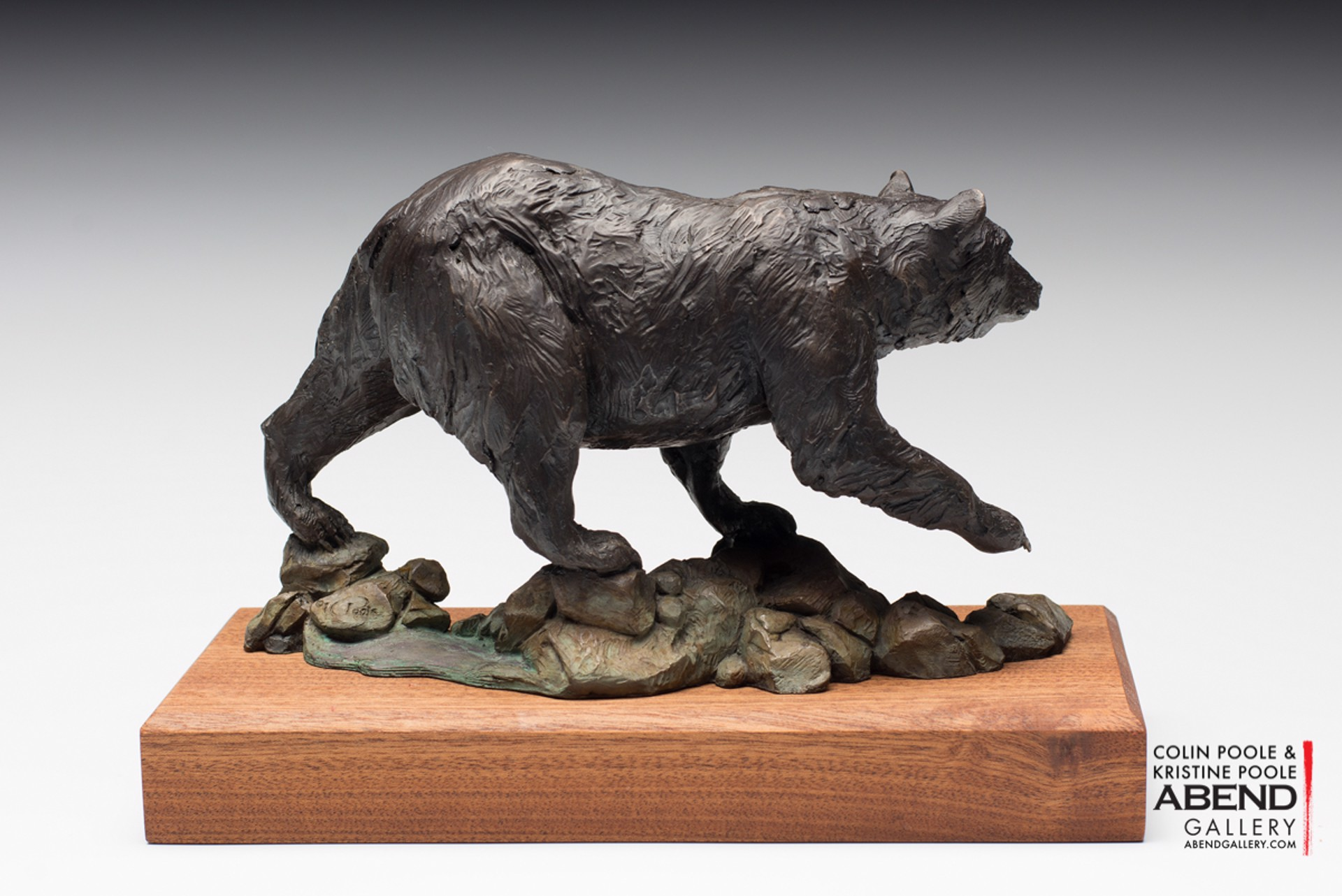Black Bear by Colin & Kristine Poole