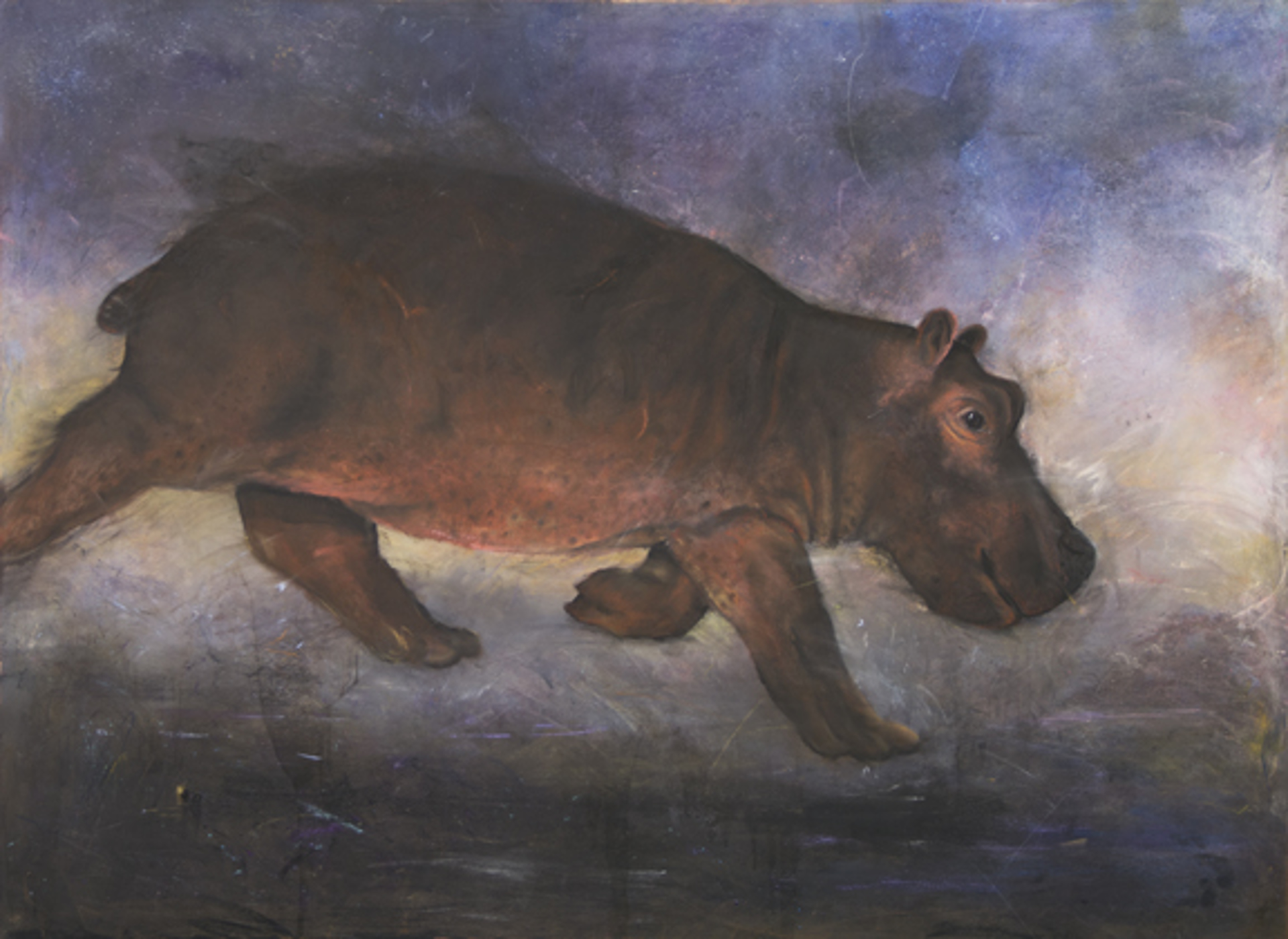 Hippo by Robert Bissell