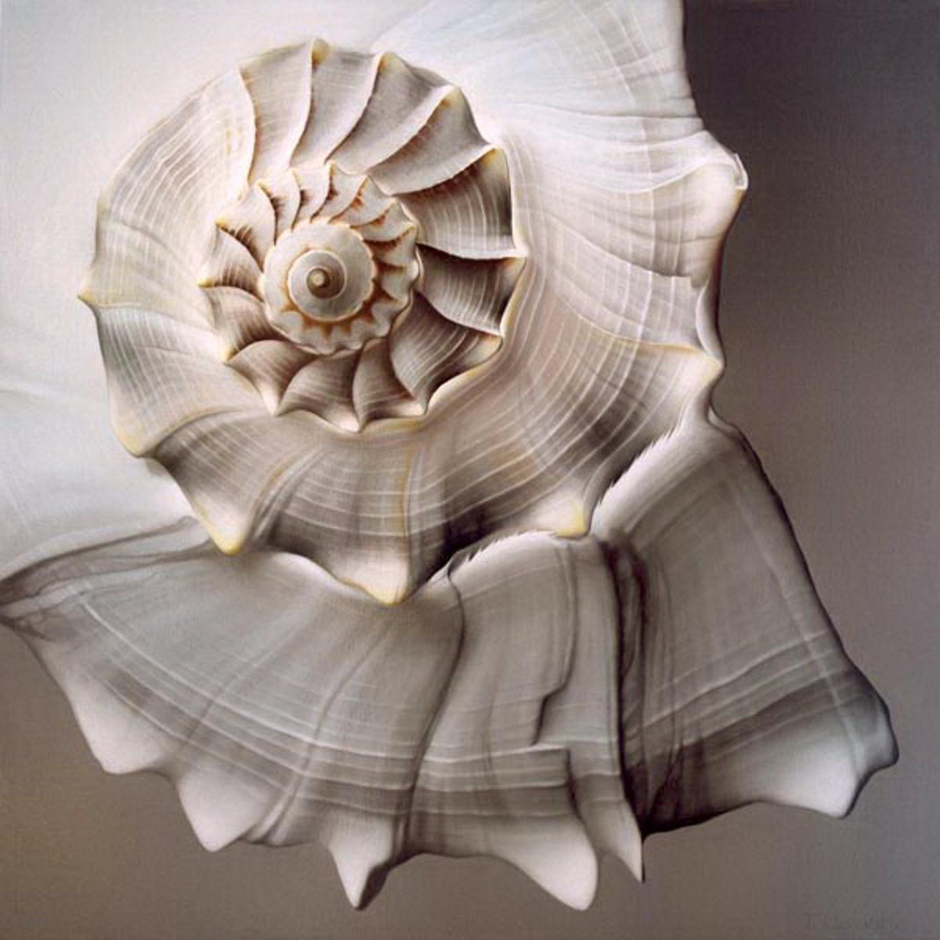 Lightening Whelk by Tatyana Klevenskiy