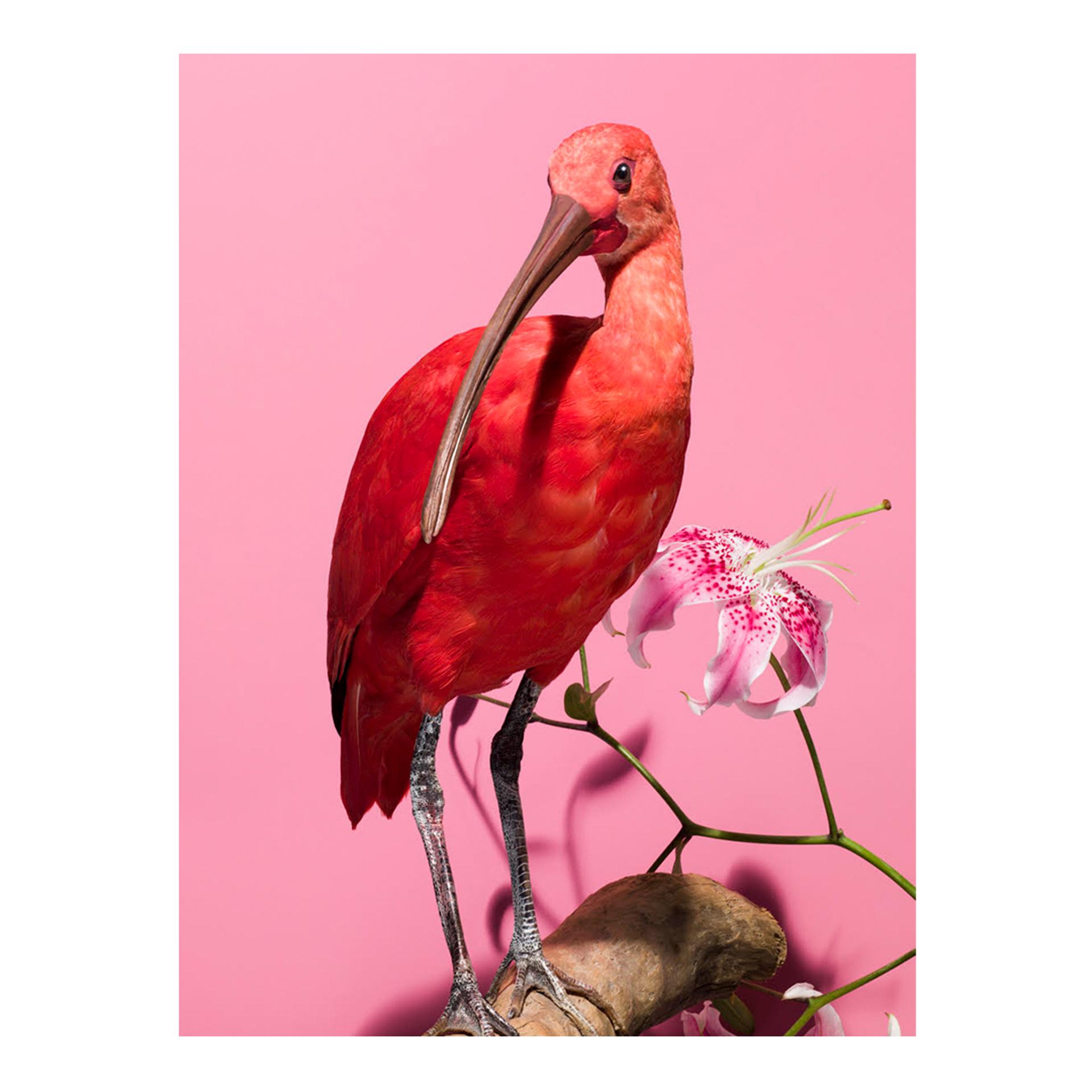 Extinct #2 by Gabriella Imperatori-Penn
