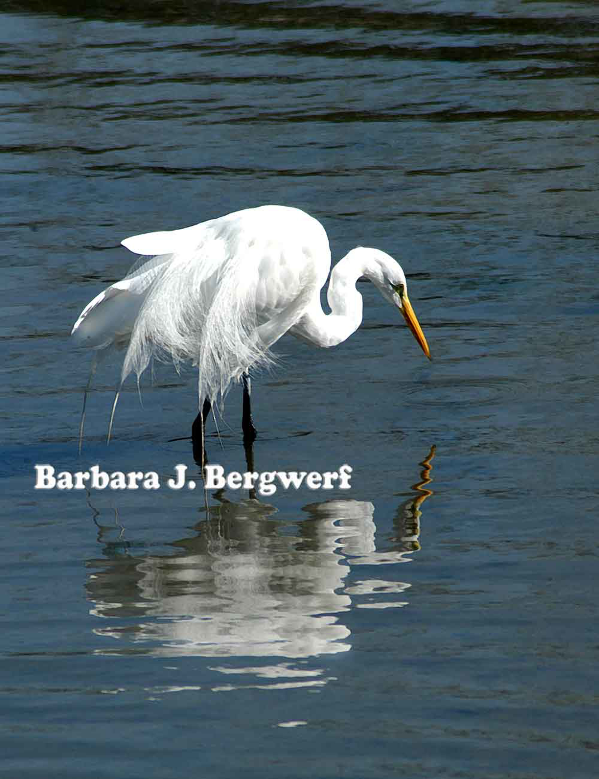 Egret Photo Block by Barbara Bergwerf, Photography