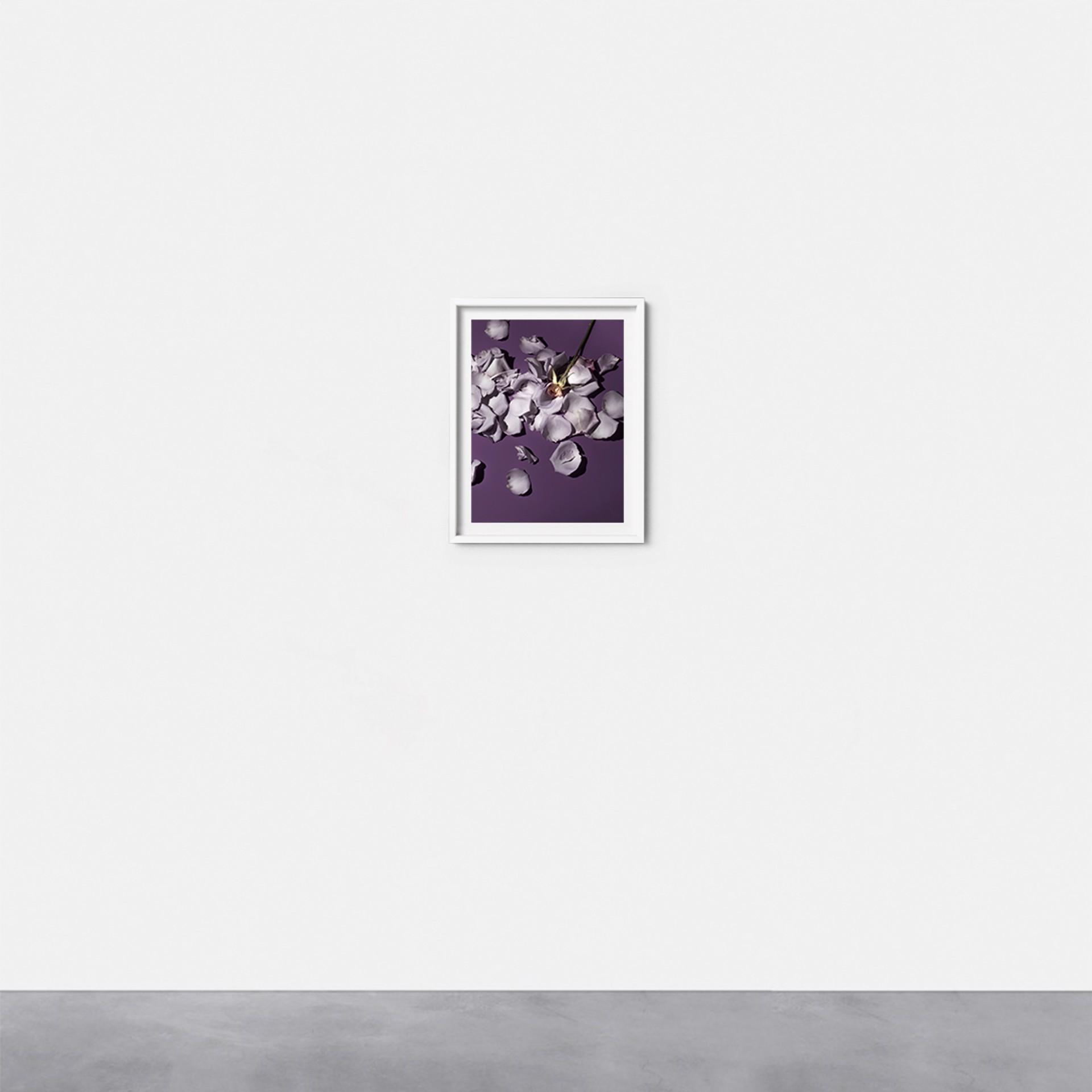Flower #4 by Gabriella Imperatori-Penn
