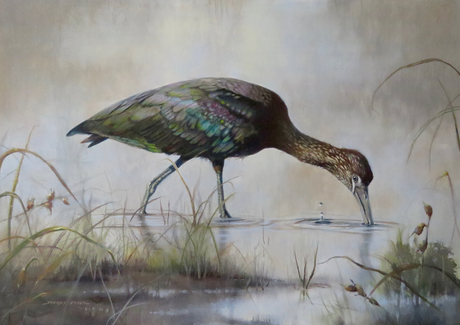 Glossy Ibis by Sherry Egger