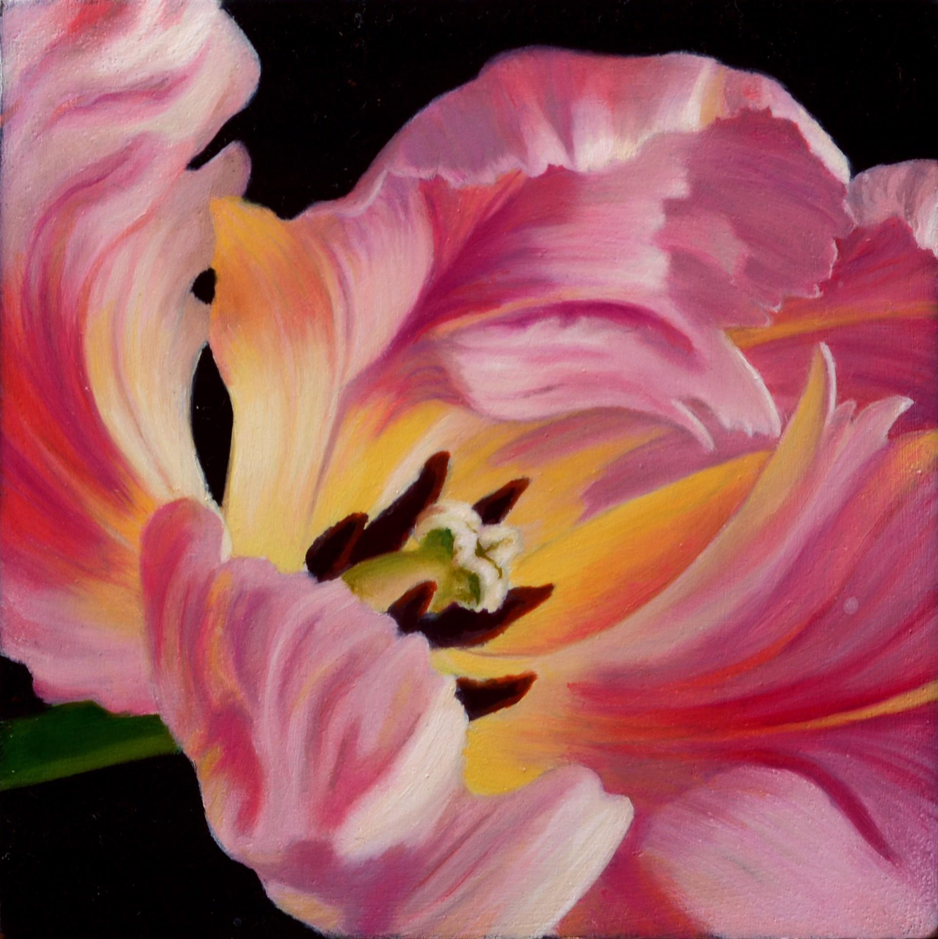 Pink Tulip by Sarah van der Helm