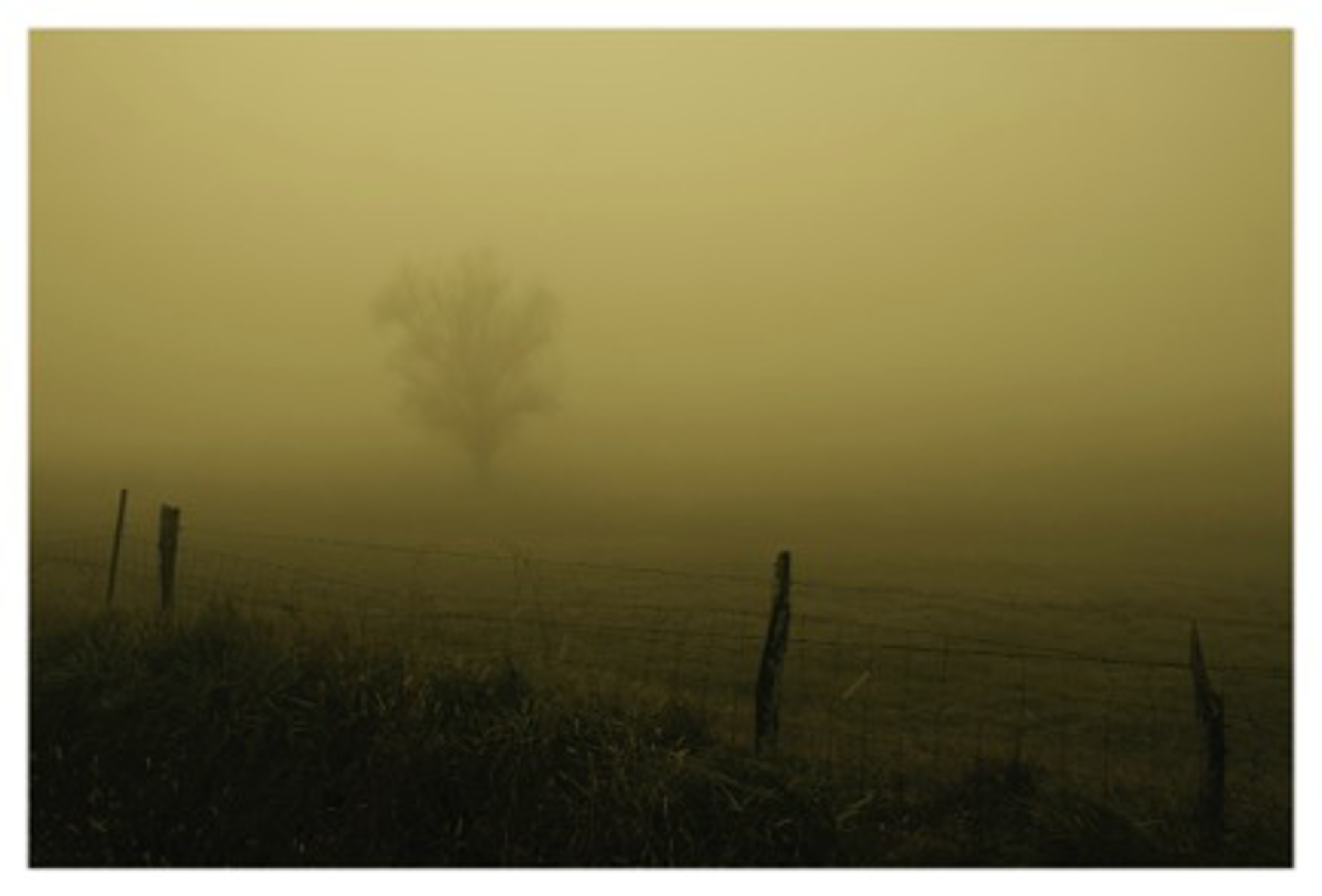 Fog Trees Seven, Smith Lake by David Hillegas