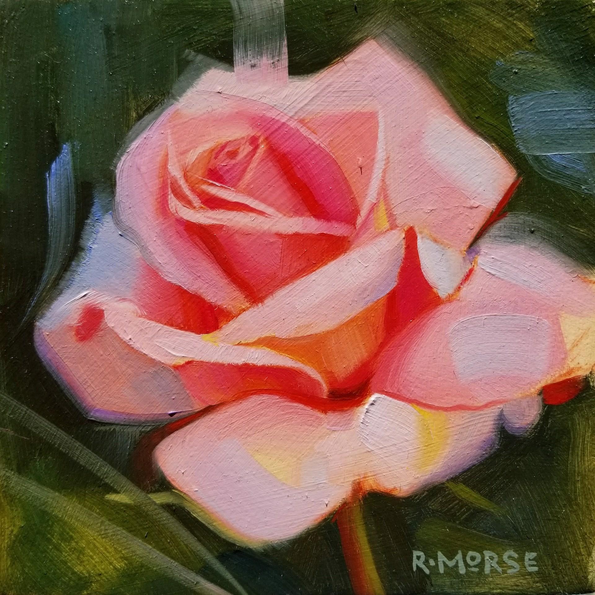 Rose by Ryan Morse