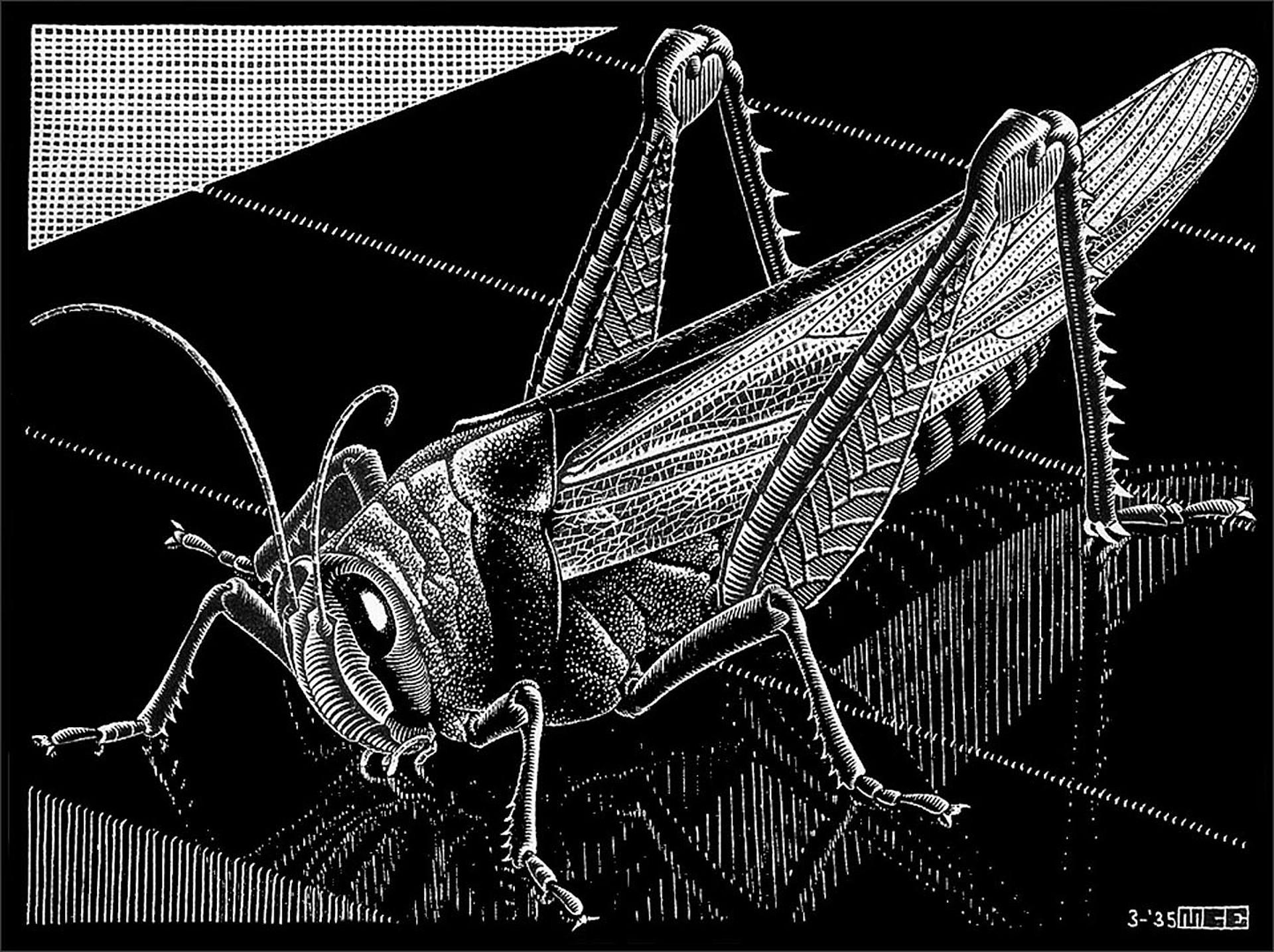 Grasshopper by M.C. Escher