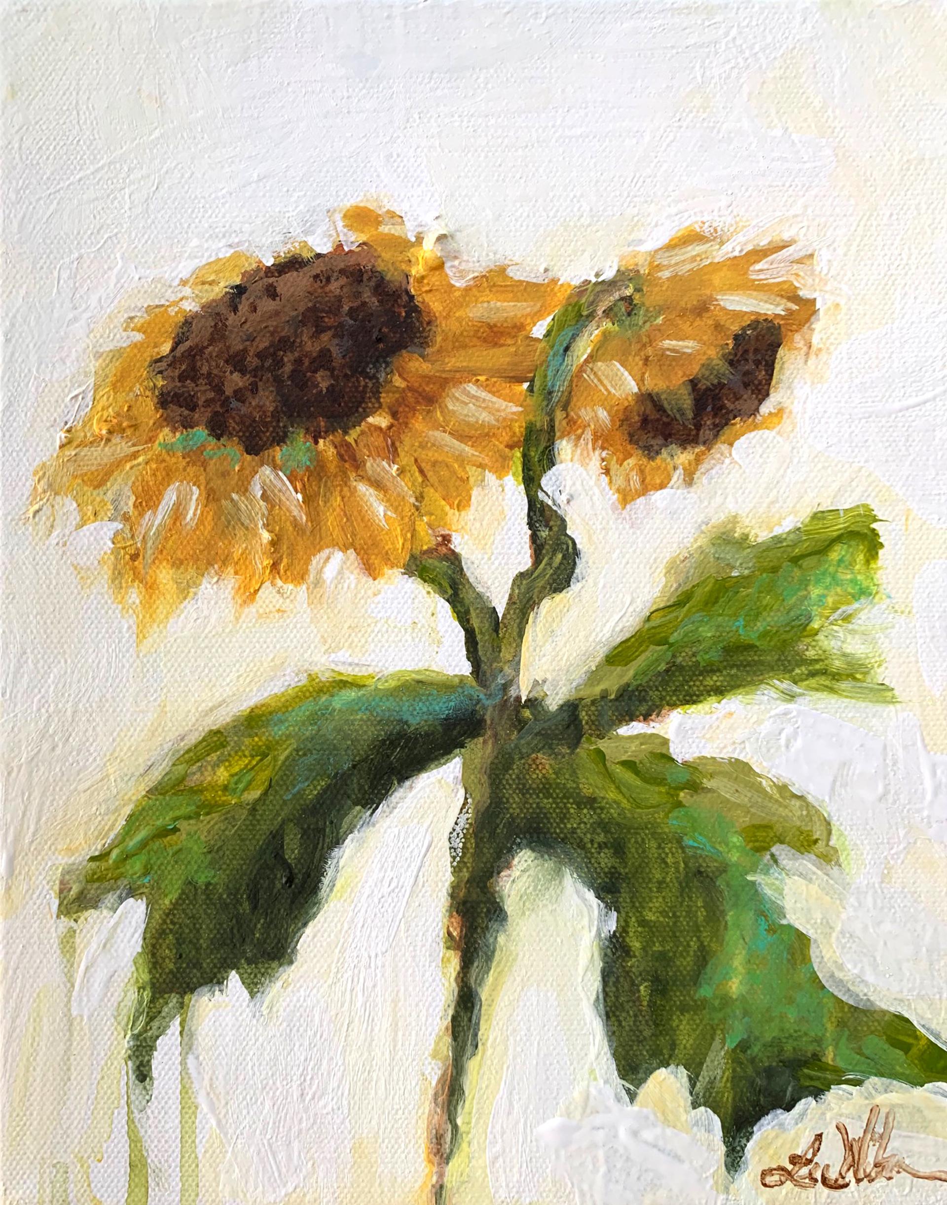 Sunflower by Lee Wilson