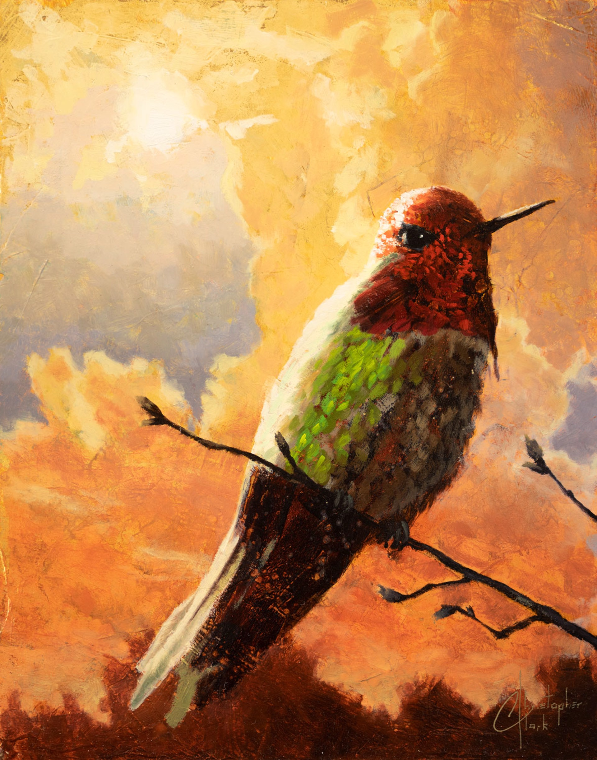Shimmering Hummingbird by Christopher Clark