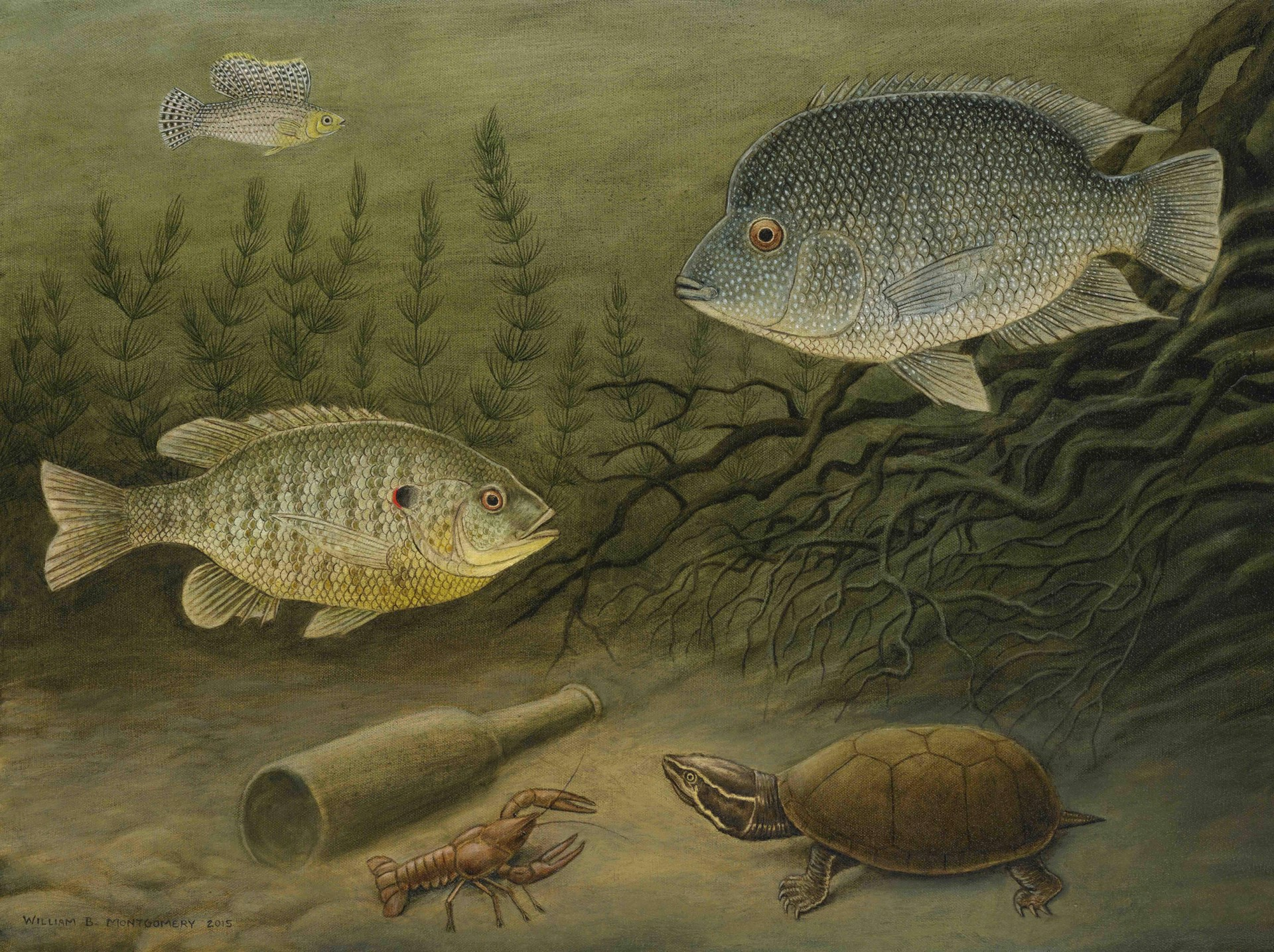 Fish & Musk Turtle by William B. Montgomery