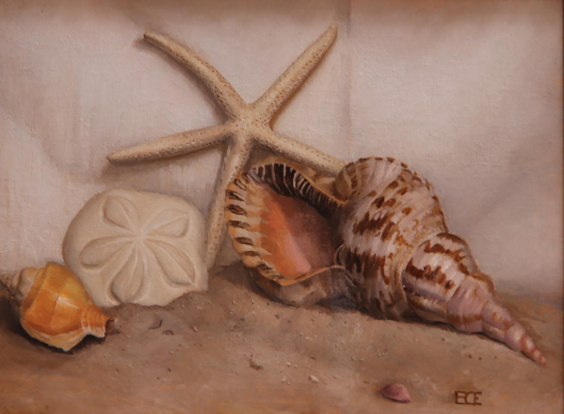 Shells by Barbara Efchak