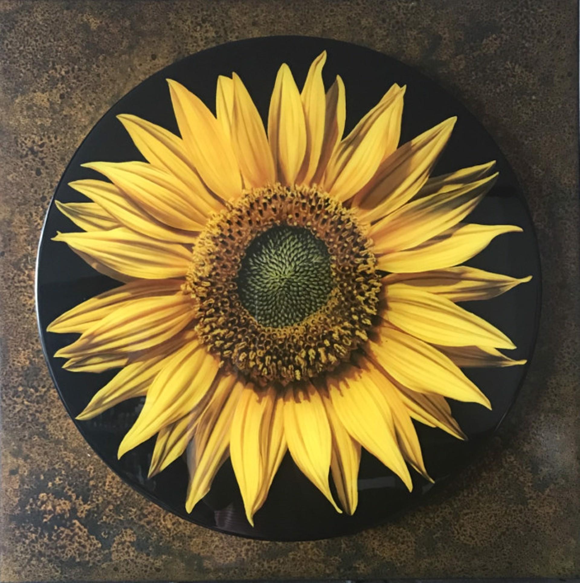 Under The Sun by Larissa Morais