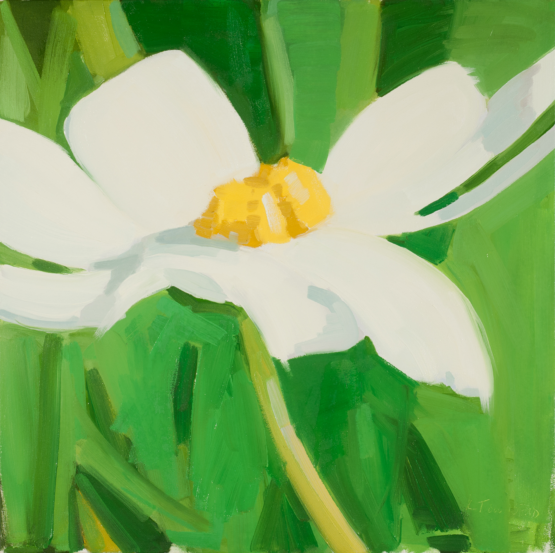 White Dancing Daisy by Krista Townsend