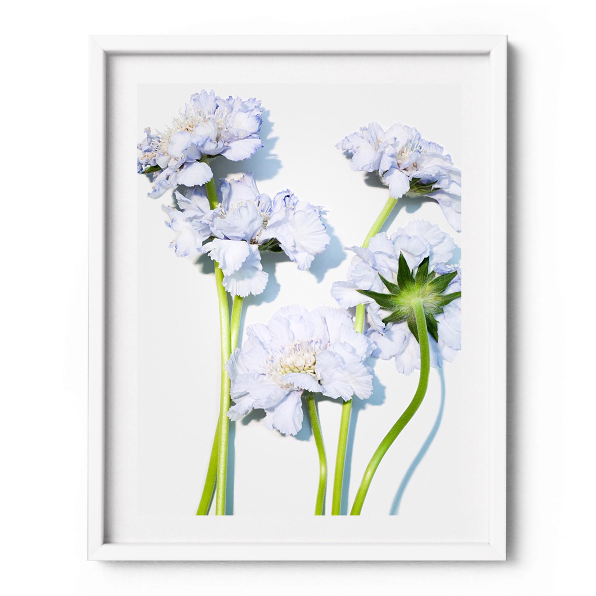 Flower #2 by Gabriella Imperatori-Penn