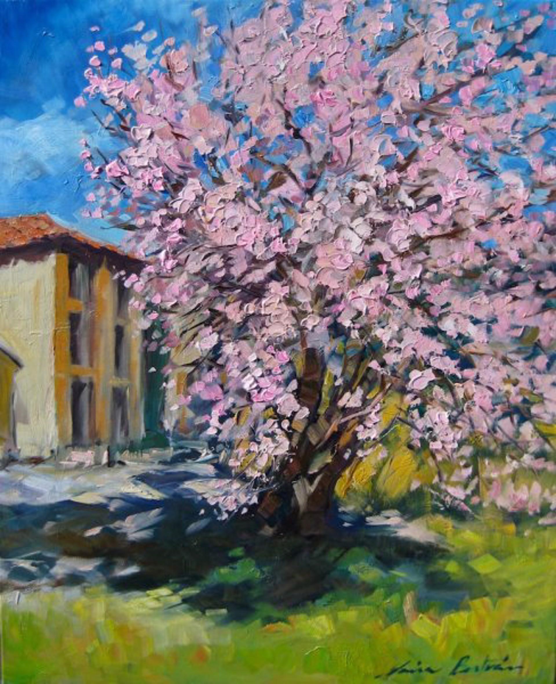 Almond Tree In Redons by Maria Bertrán