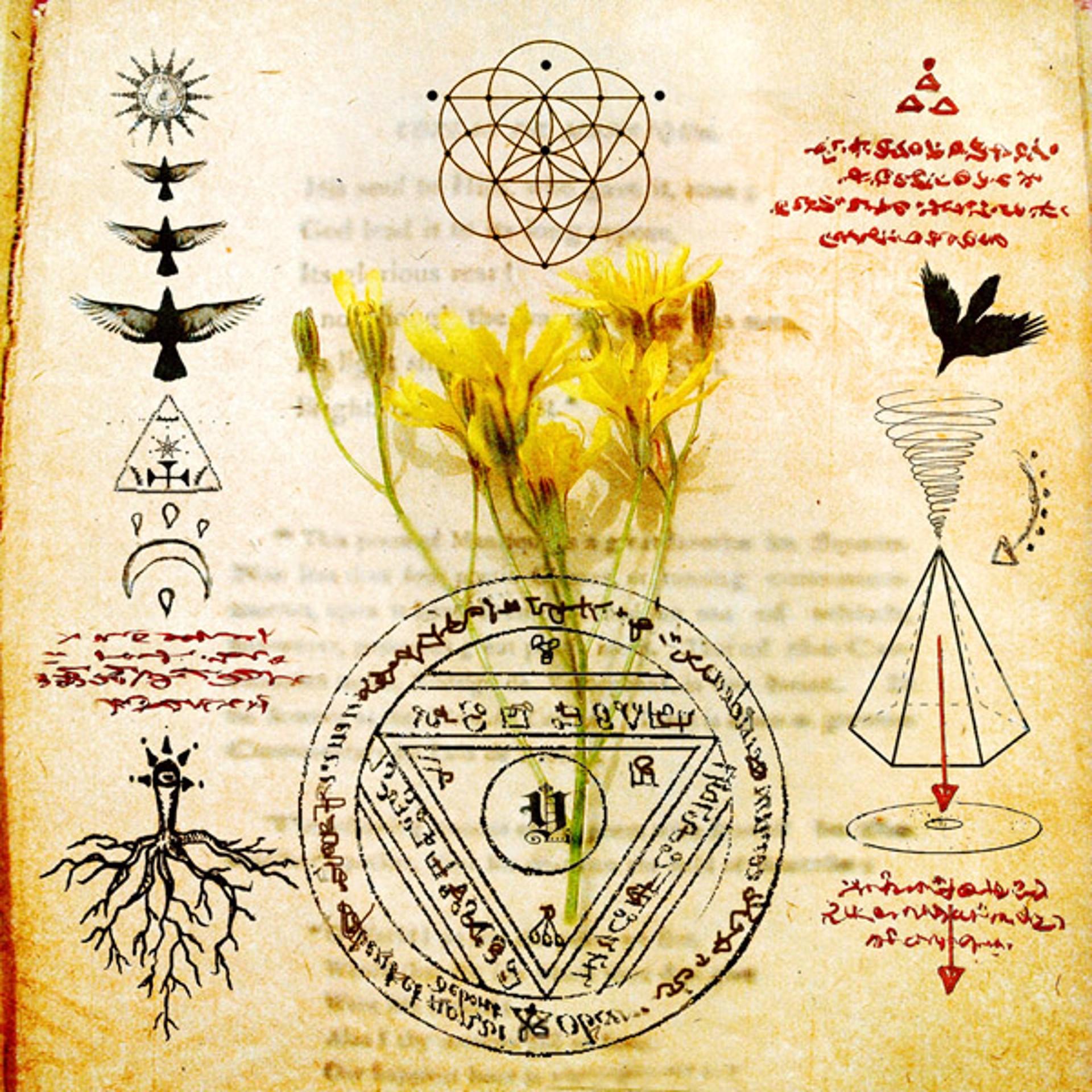 Sacred Herbs (yellow) by Yuko Ishii