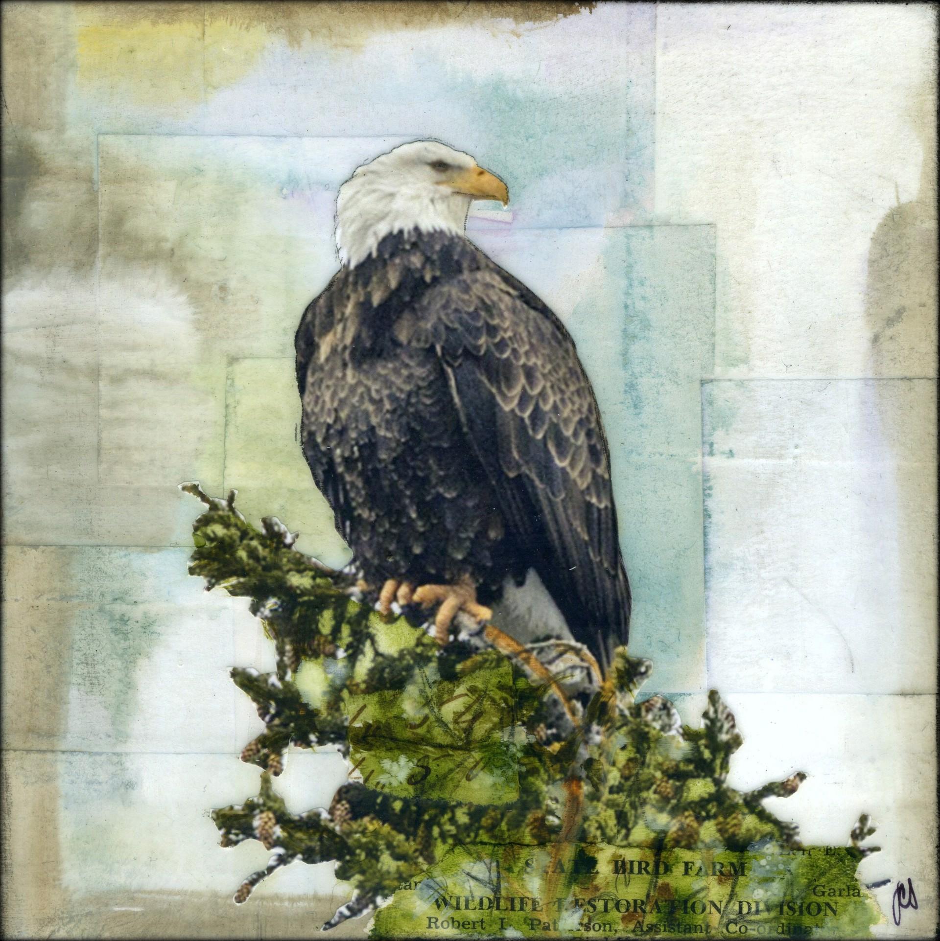 Eagle Eye by JC Spock